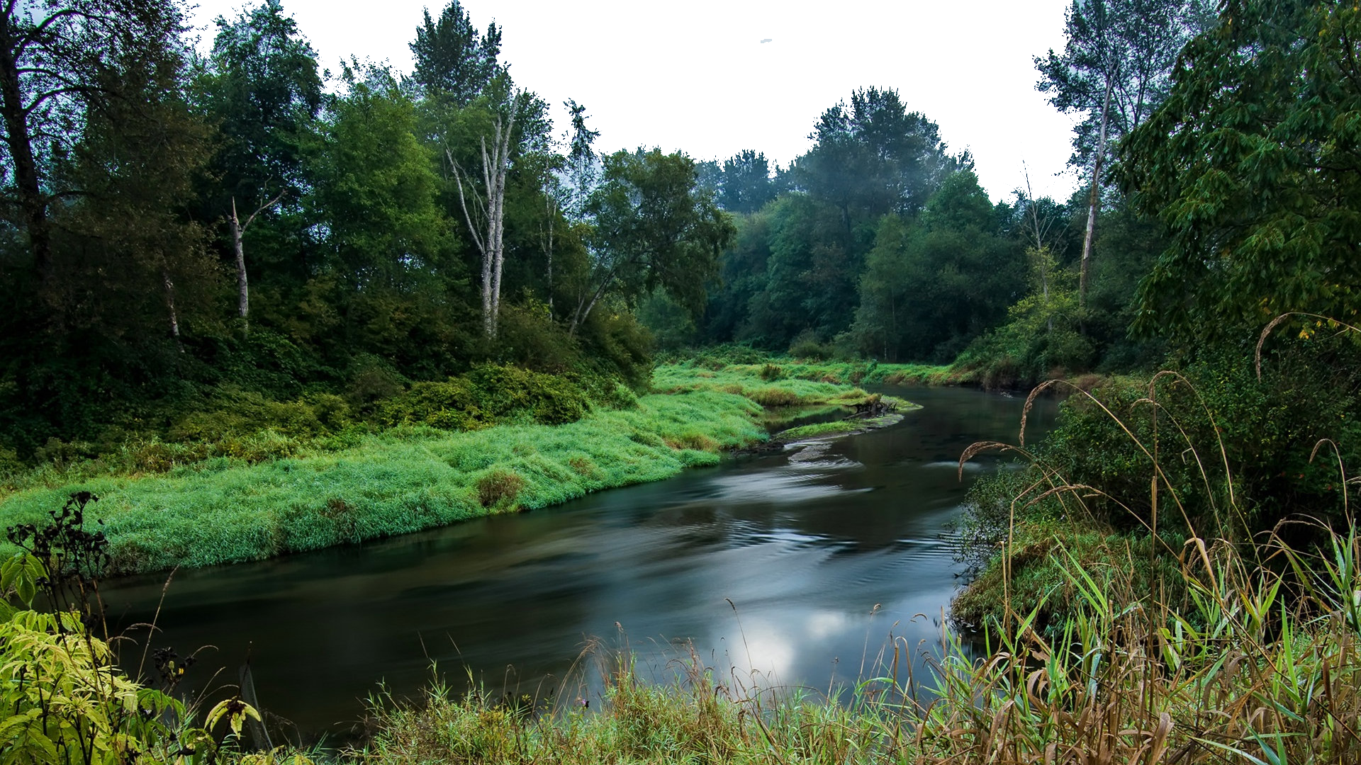 River in the Green Woods PNG Image