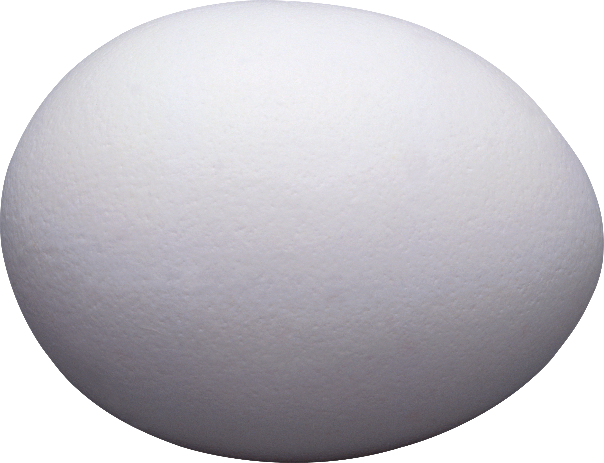 One White Egg