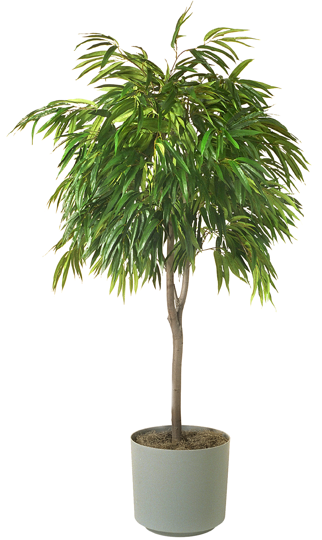 Houseplant PNG Image