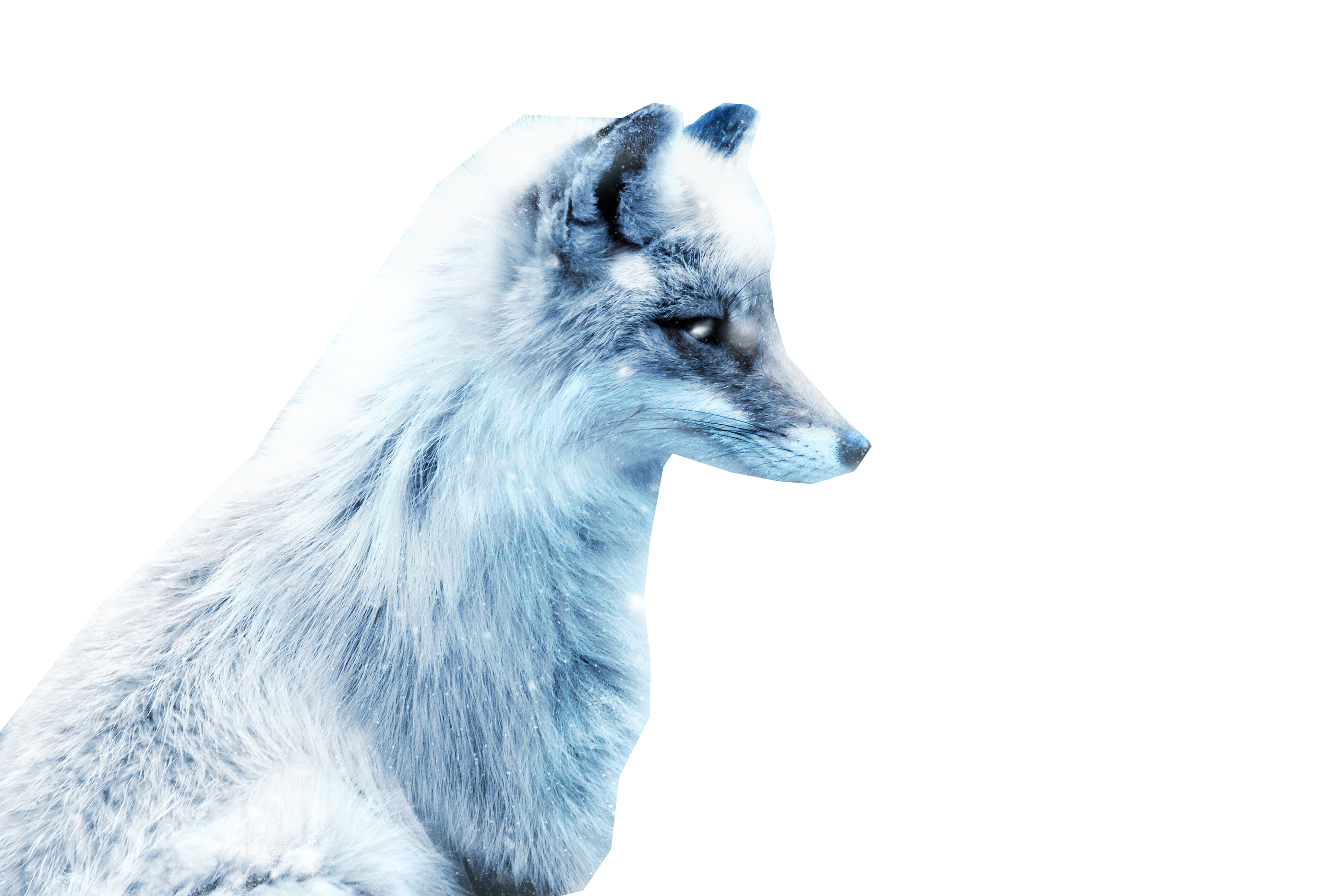 Download Arctic Snow Fox Png Image For Free