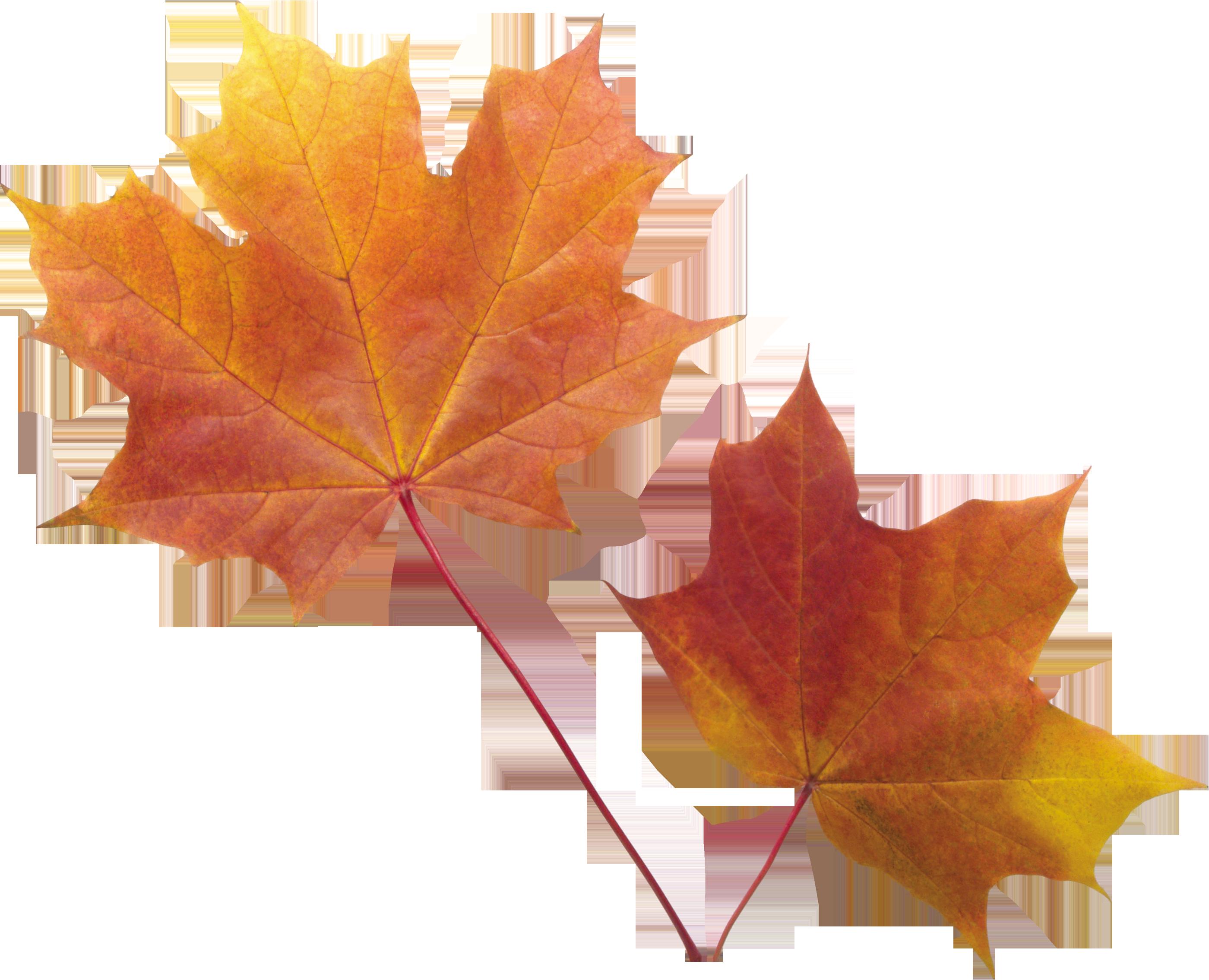 Autumn Leaf PNG Image - PurePNG | Free transparent CC0 PNG ...