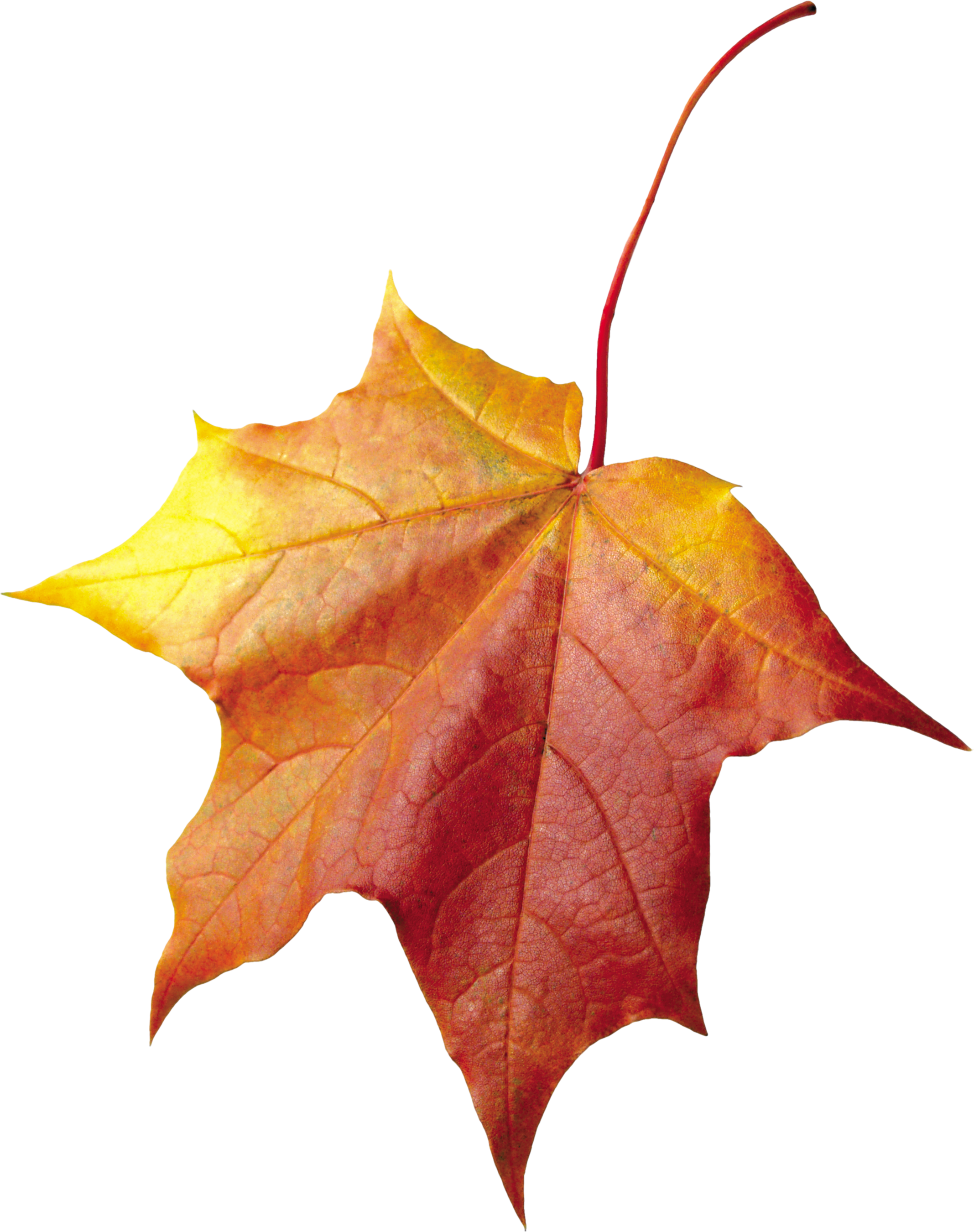 Autumn Leaf PNG Image - PurePNG   Free transparent CC0 PNG ...