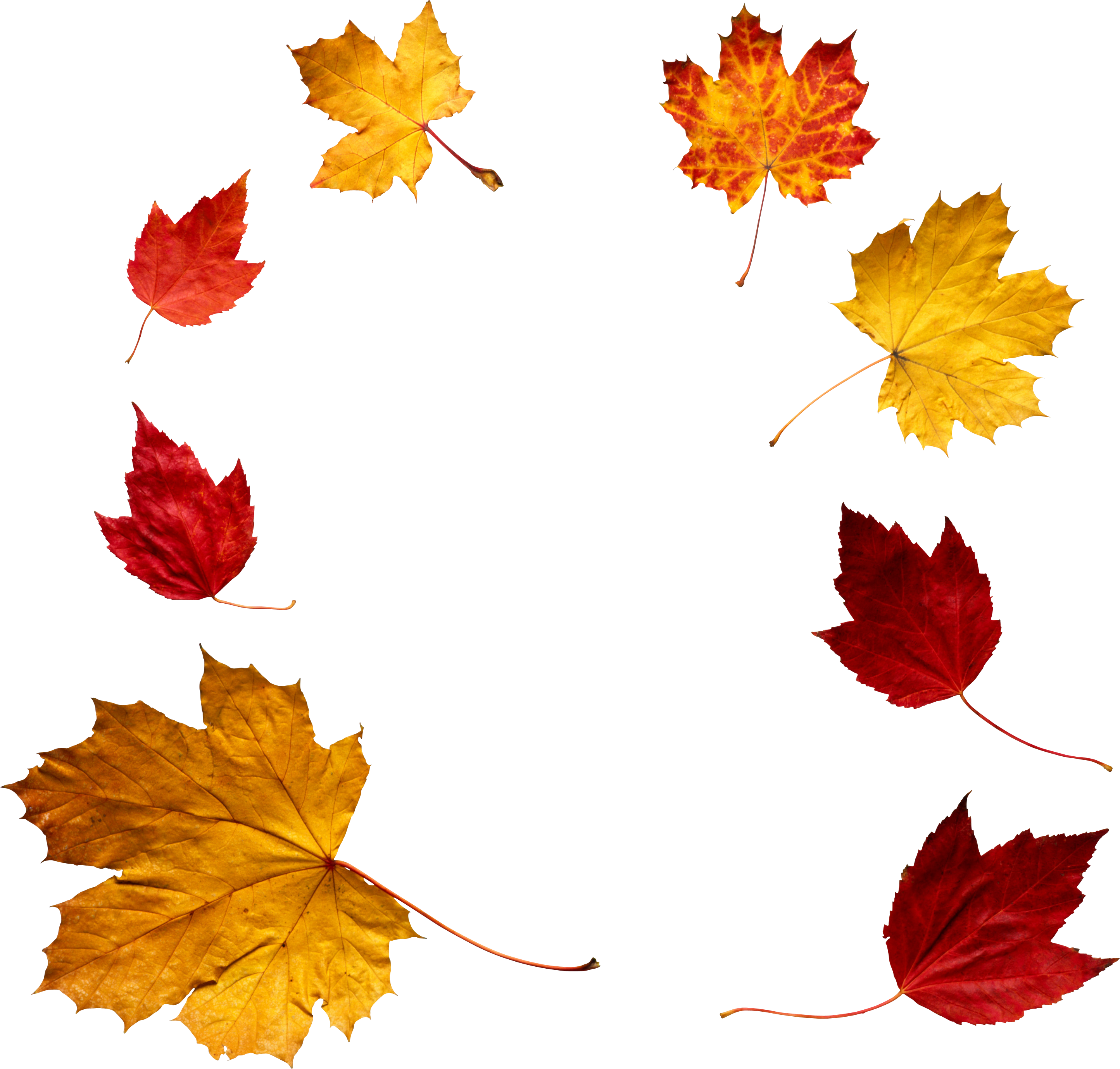 autumn leaf png image purepng free transparent cc0 png image library