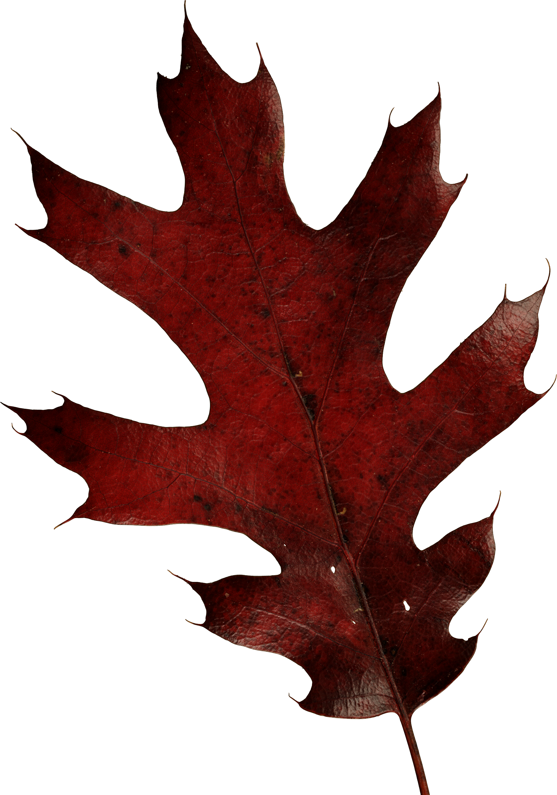 Autumn Leaves PNG Image - PurePNG | Free transparent CC0 ...