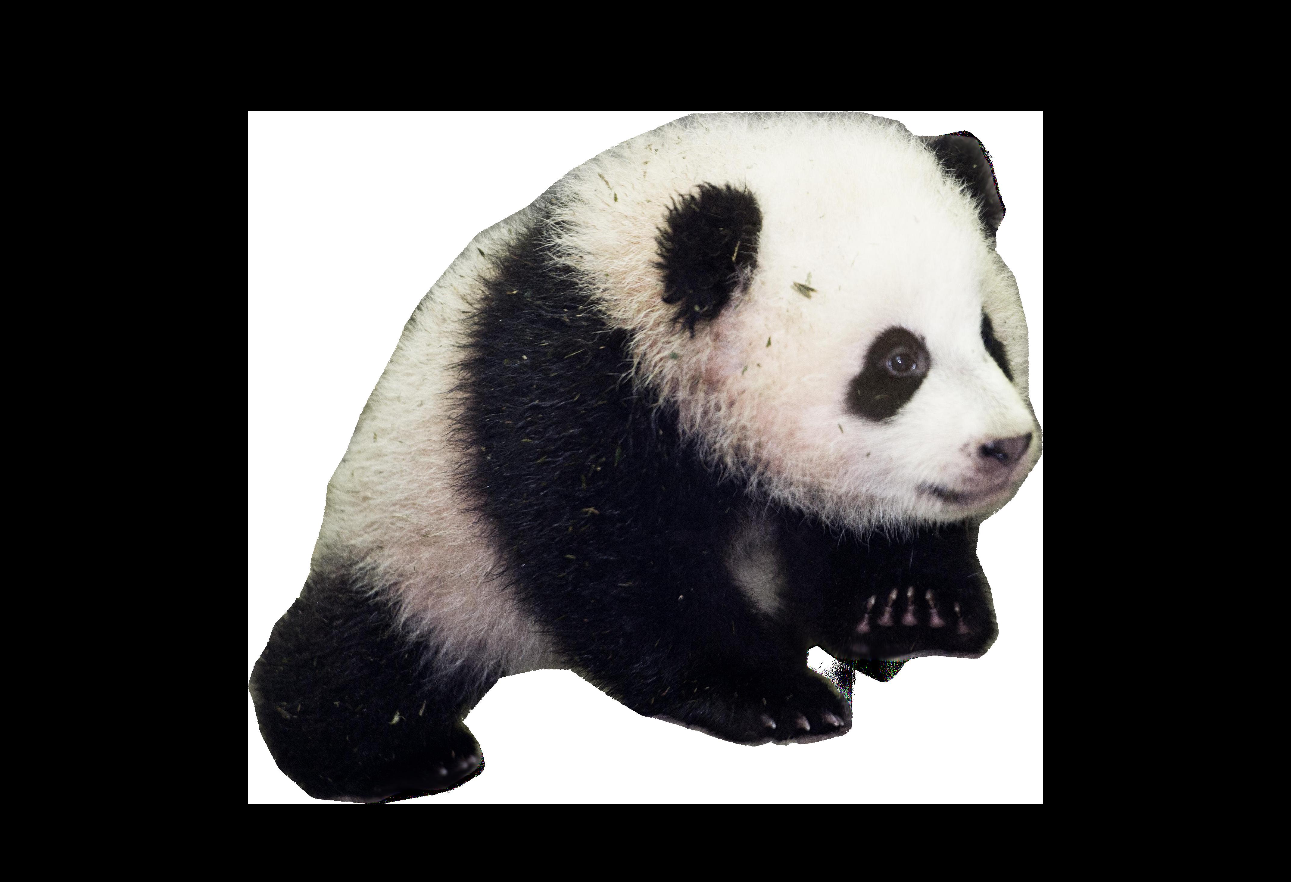 Panda Bear Baby Clothing