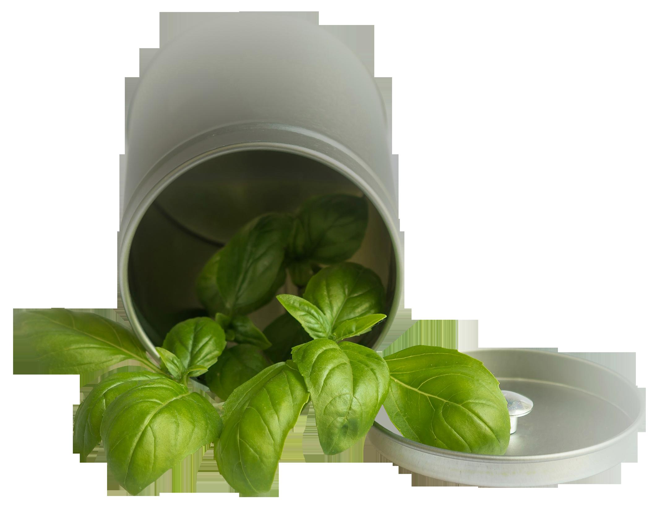 Basil Leaf Pot