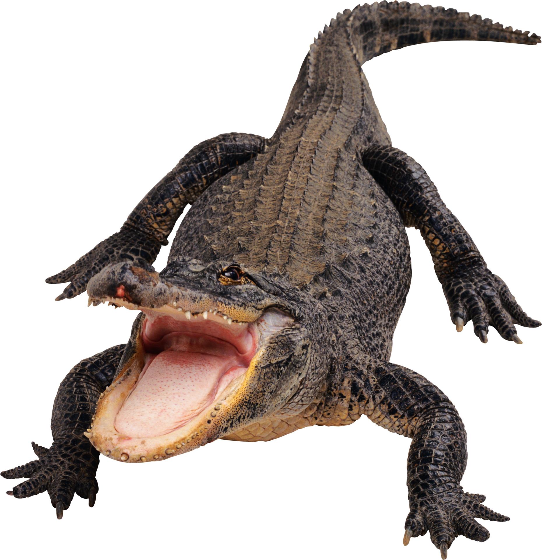 Black Crocodile