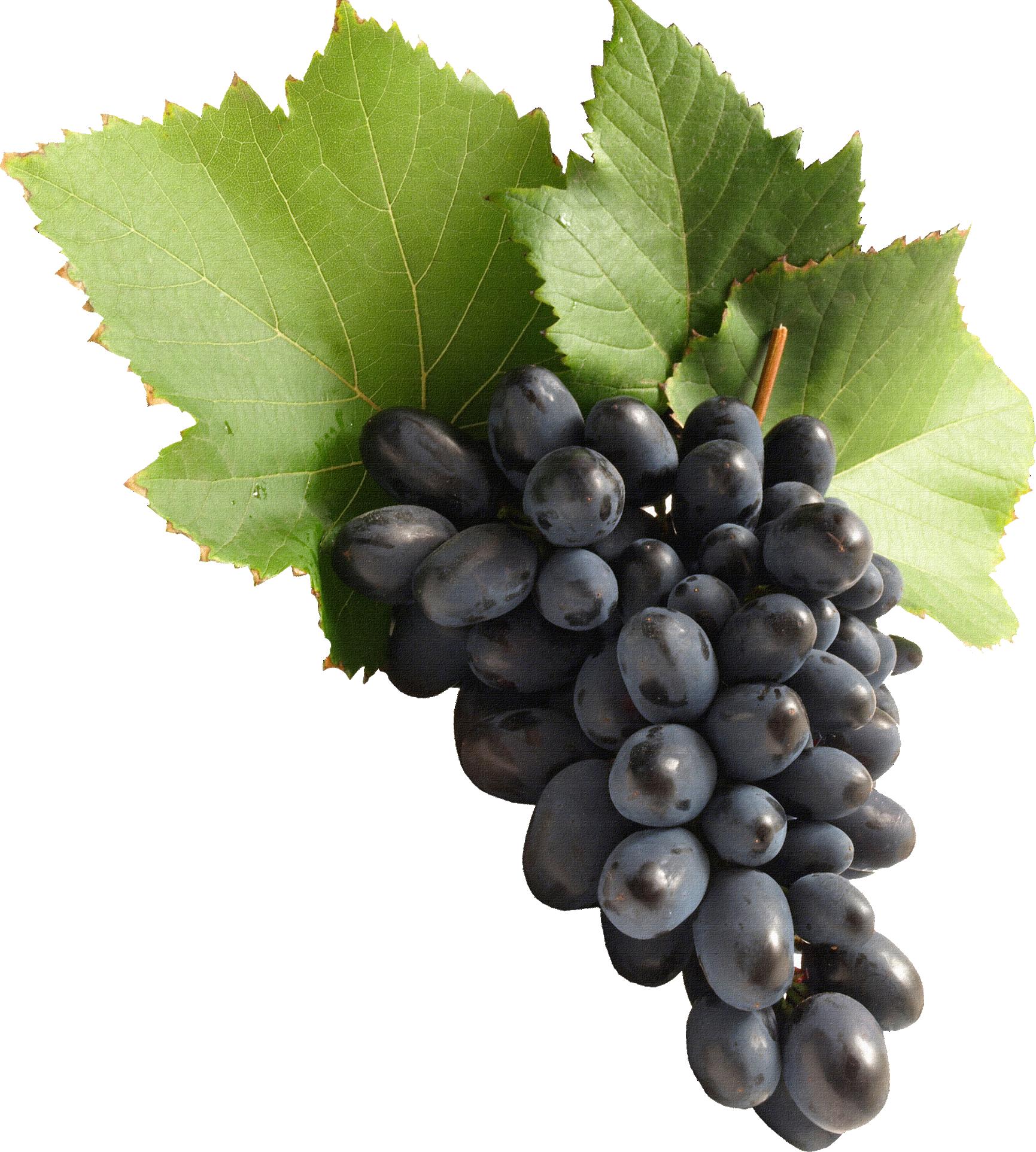 Black Grapes PNG Image