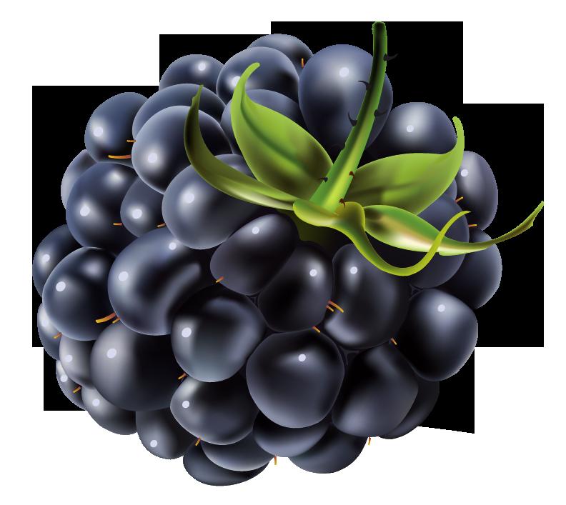 Blackberrry Drawing