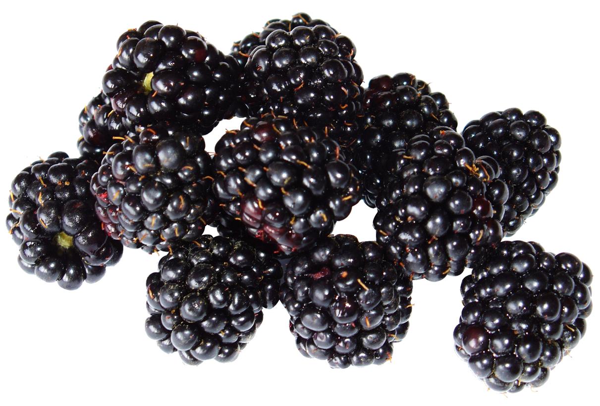 Blackberry Fruit PNG Image for Free Download