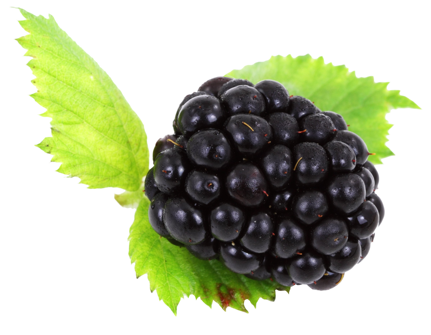 Blackberry with leaves PNG Image