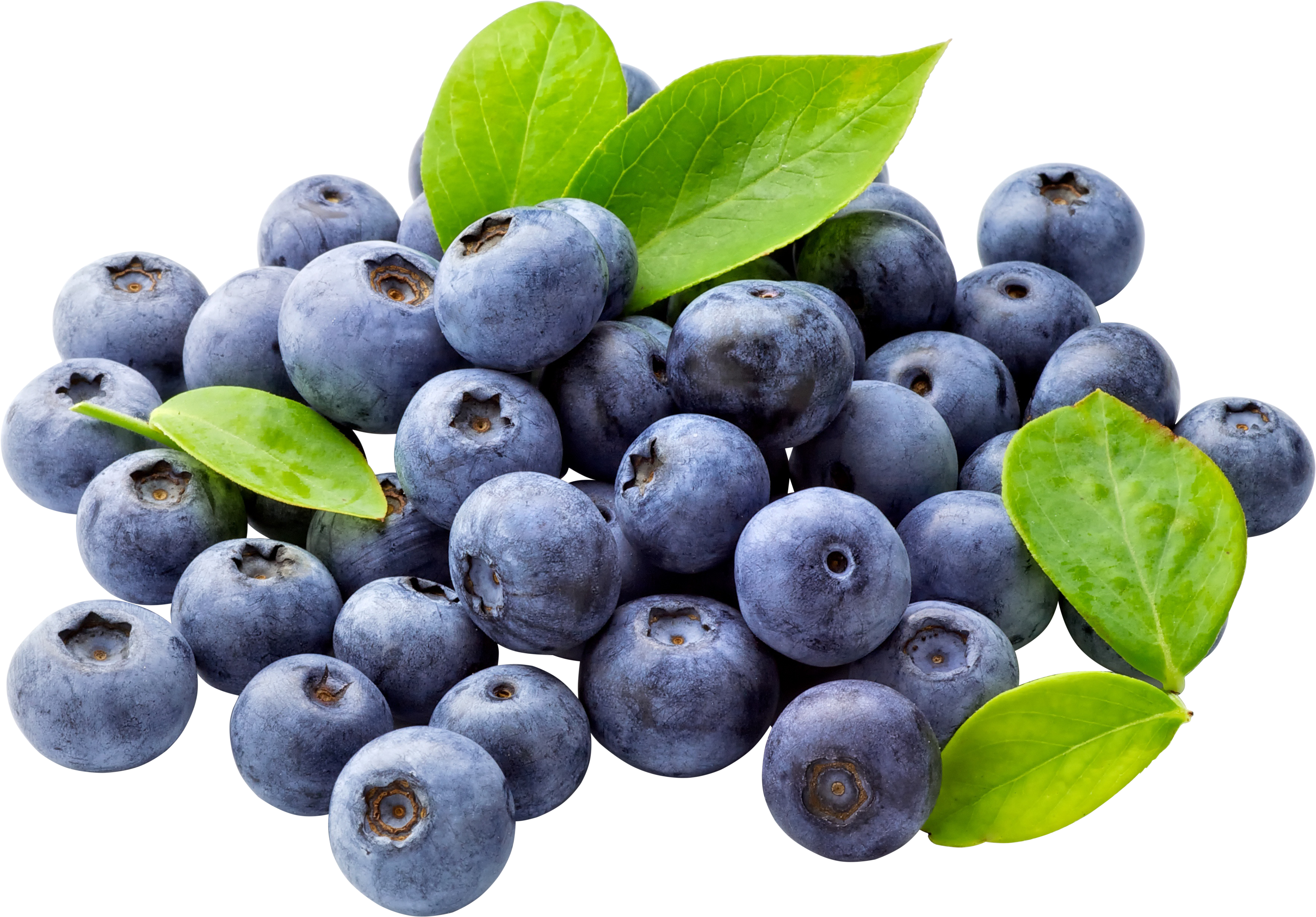 Blueberries PNG Image
