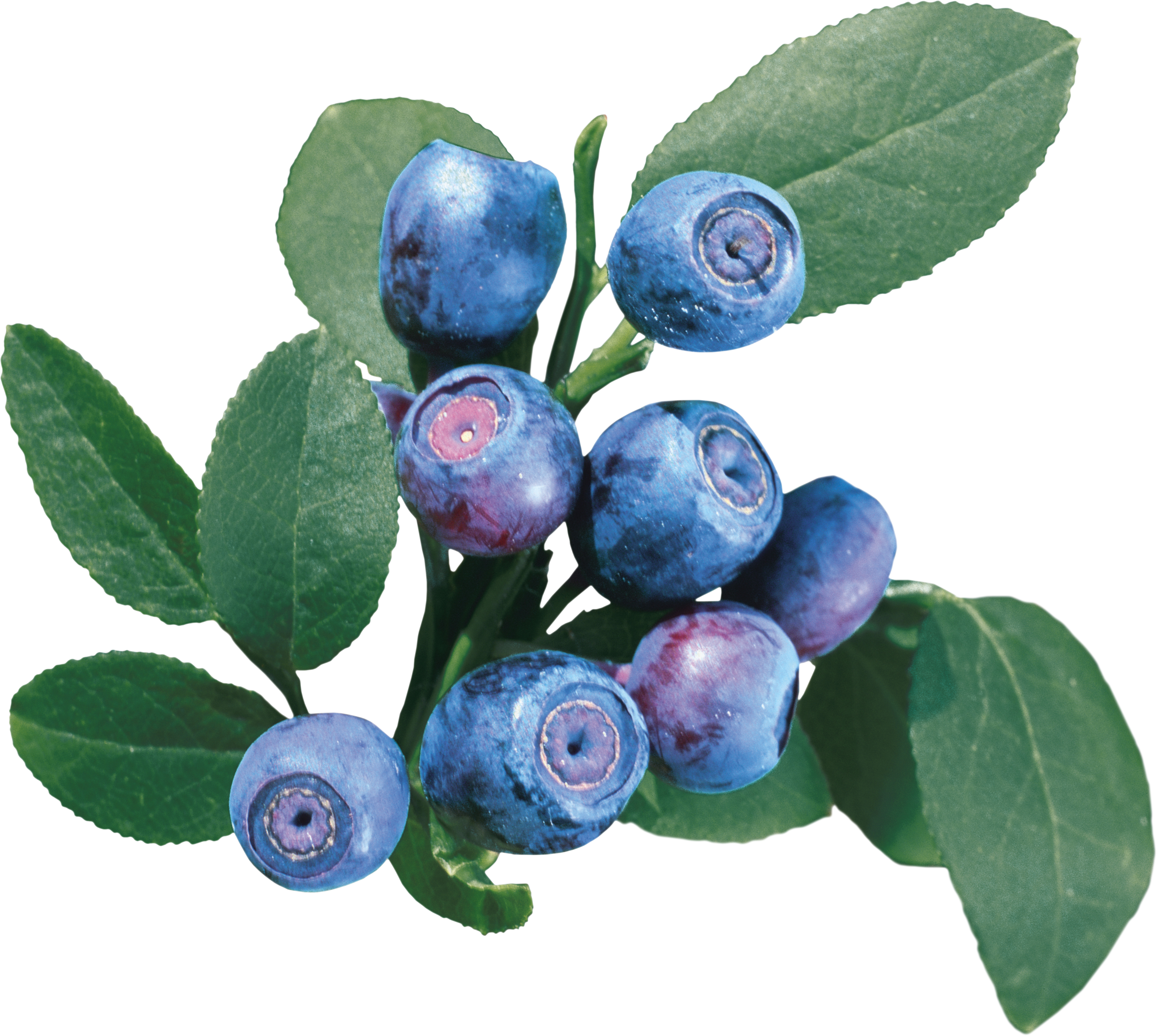 Blueberry PNG Image