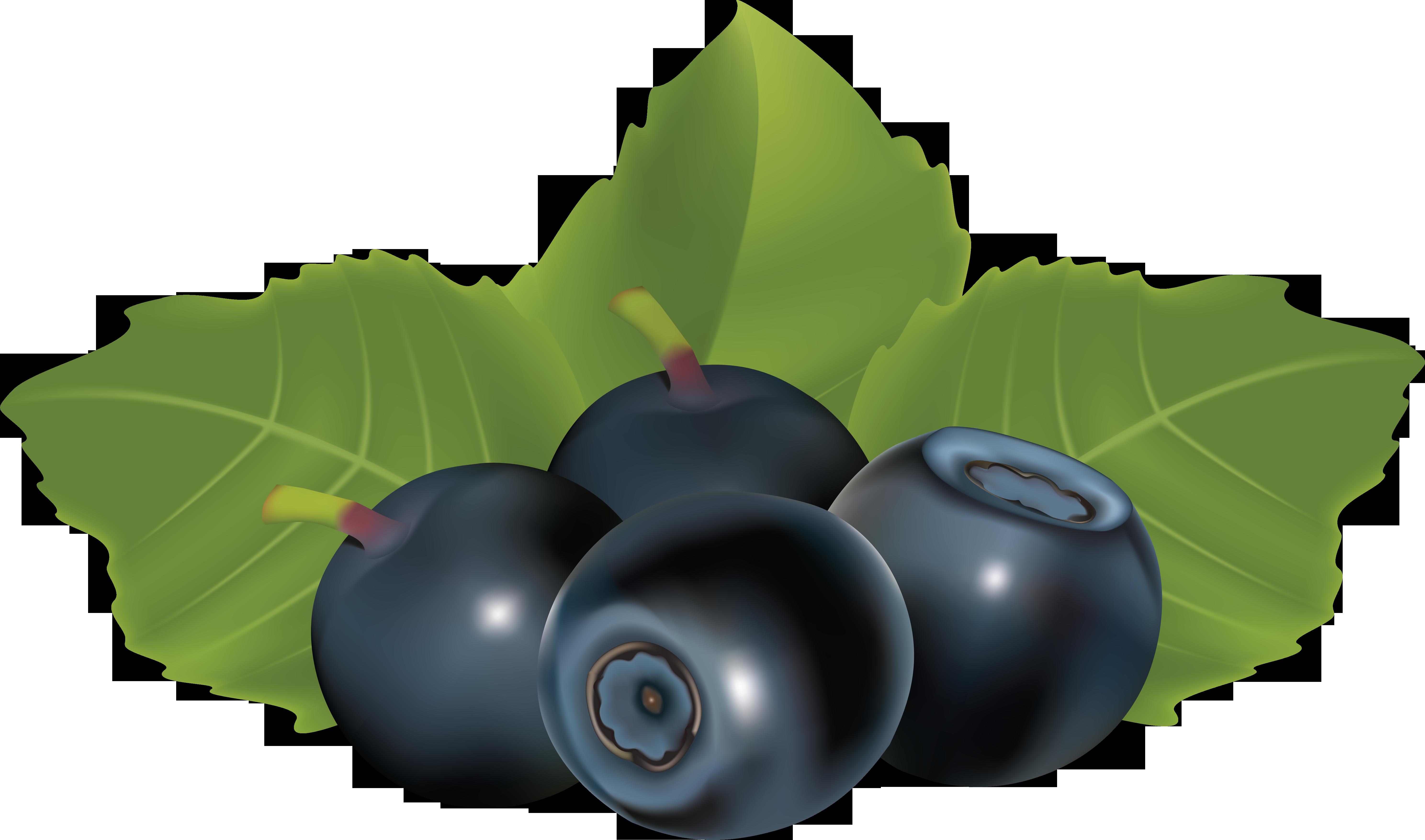 Blueberrys Drawing