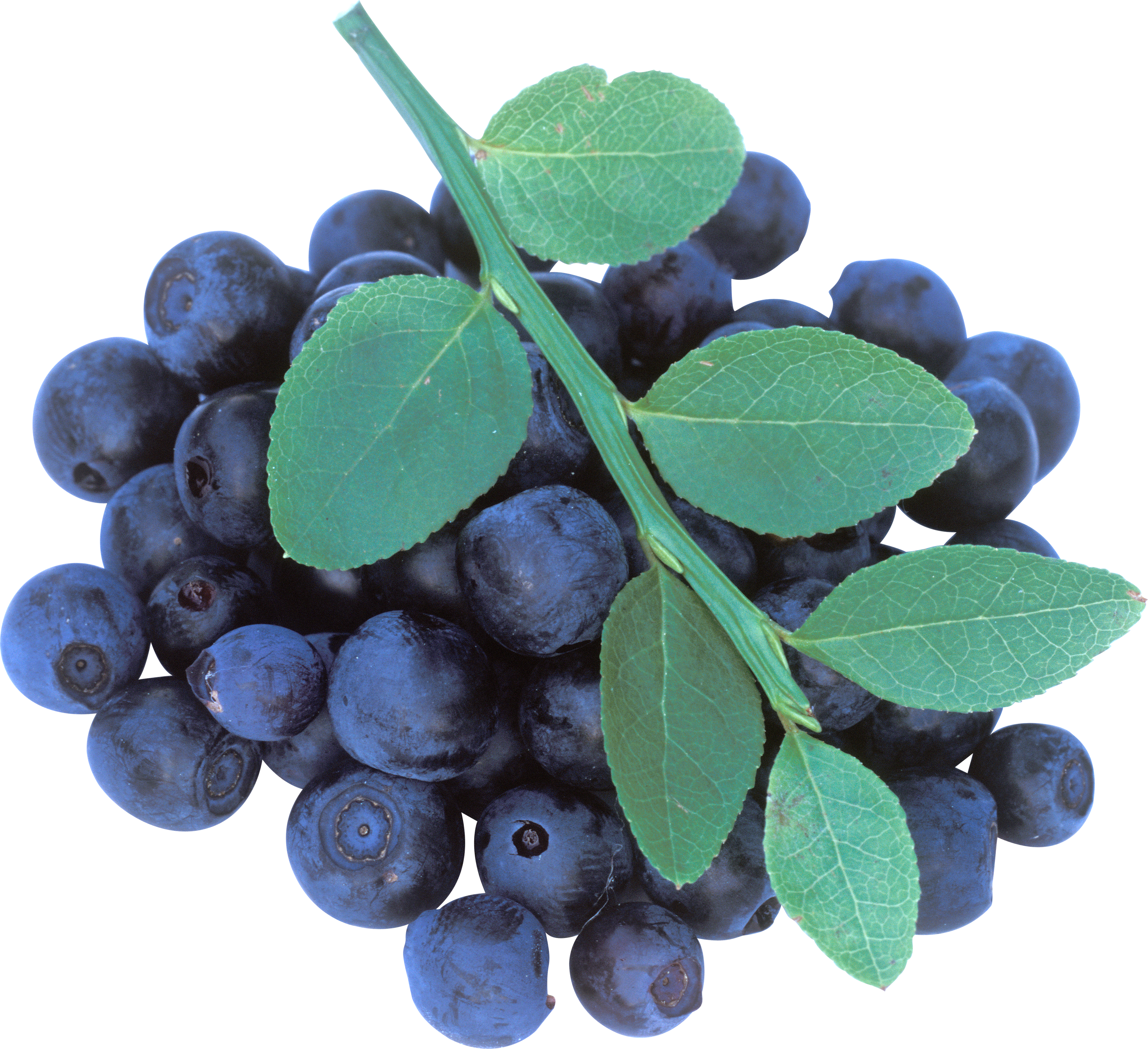 Blueberrys with Leaves PNG Image