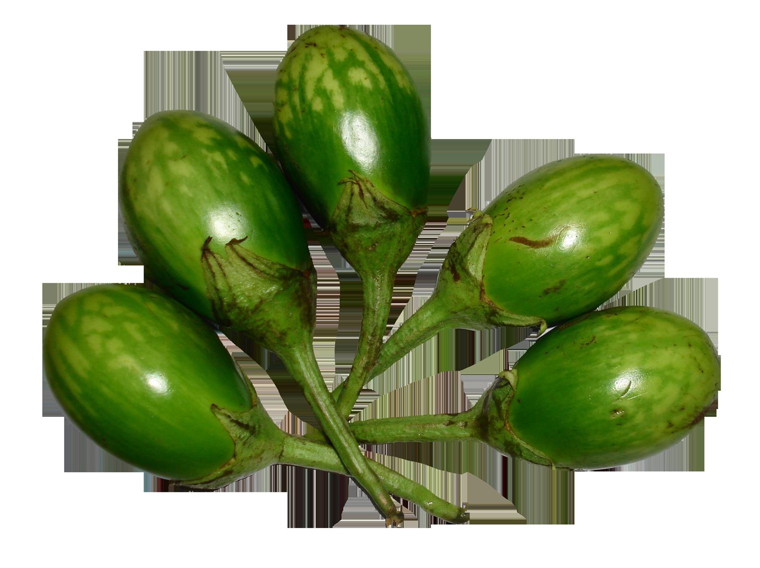 Brinjal Green PNG Image