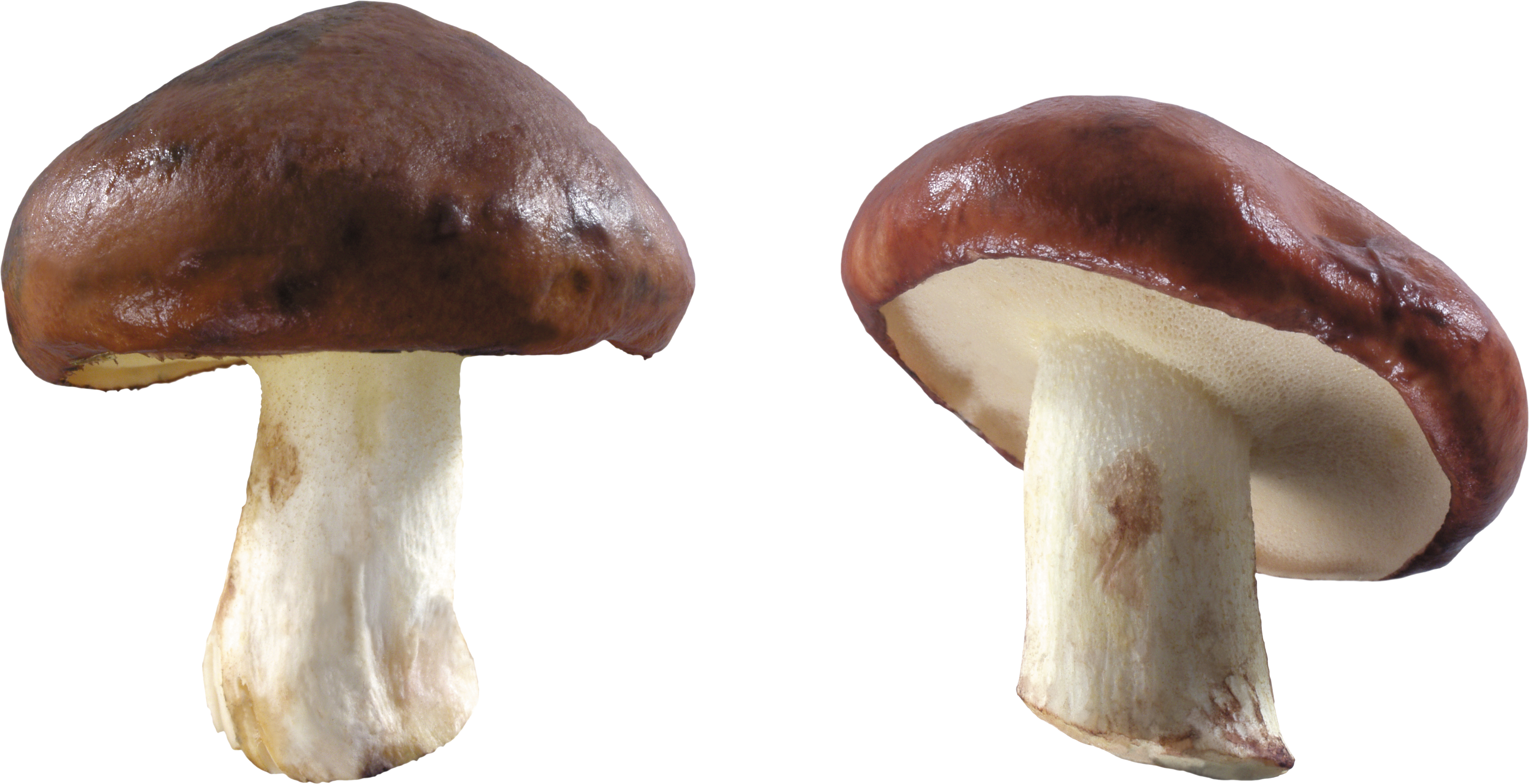 Brown and White Mushrooms PNG Image