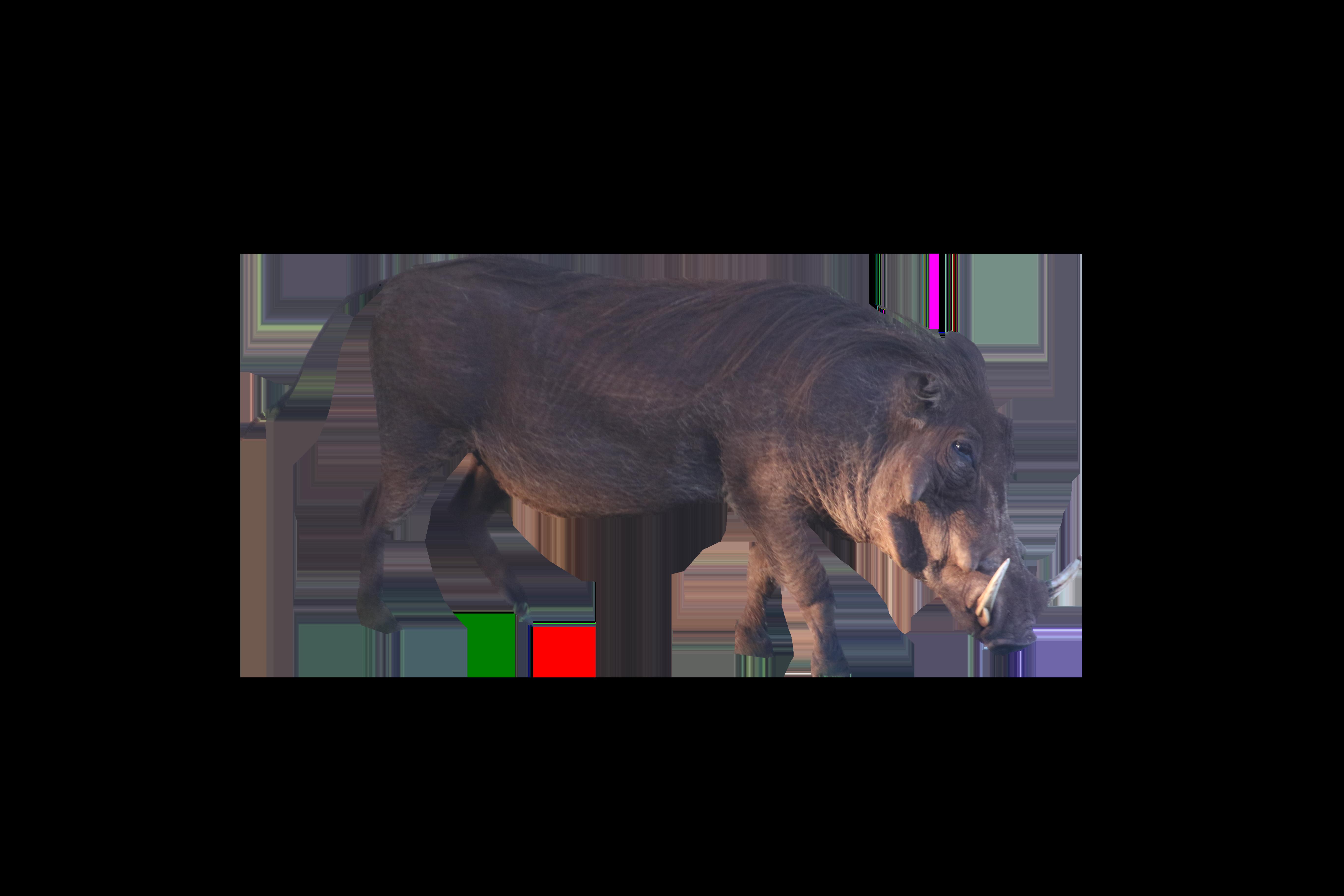 Brown Boar Standing