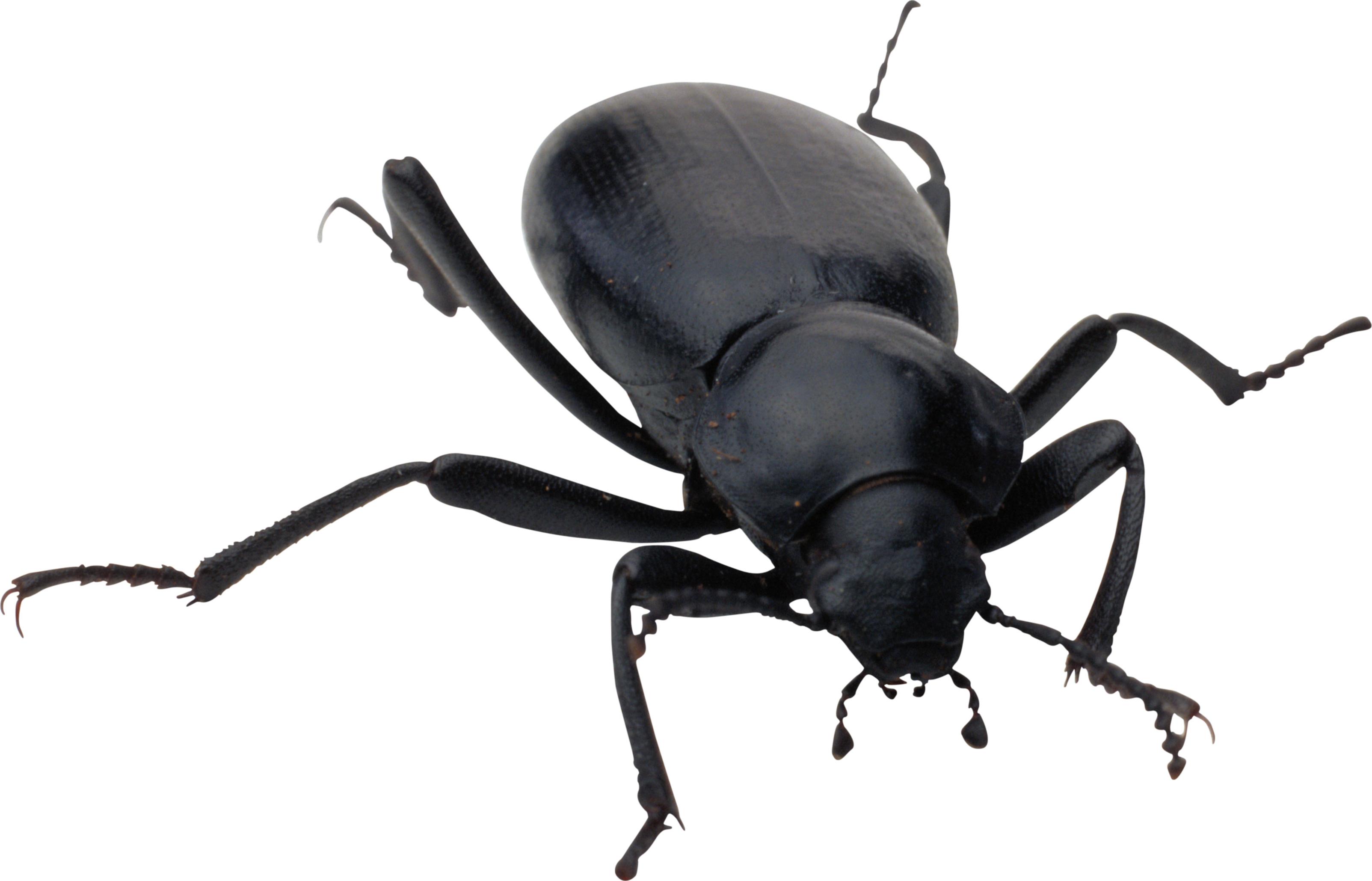 bug png image purepng free transparent cc0 png image library