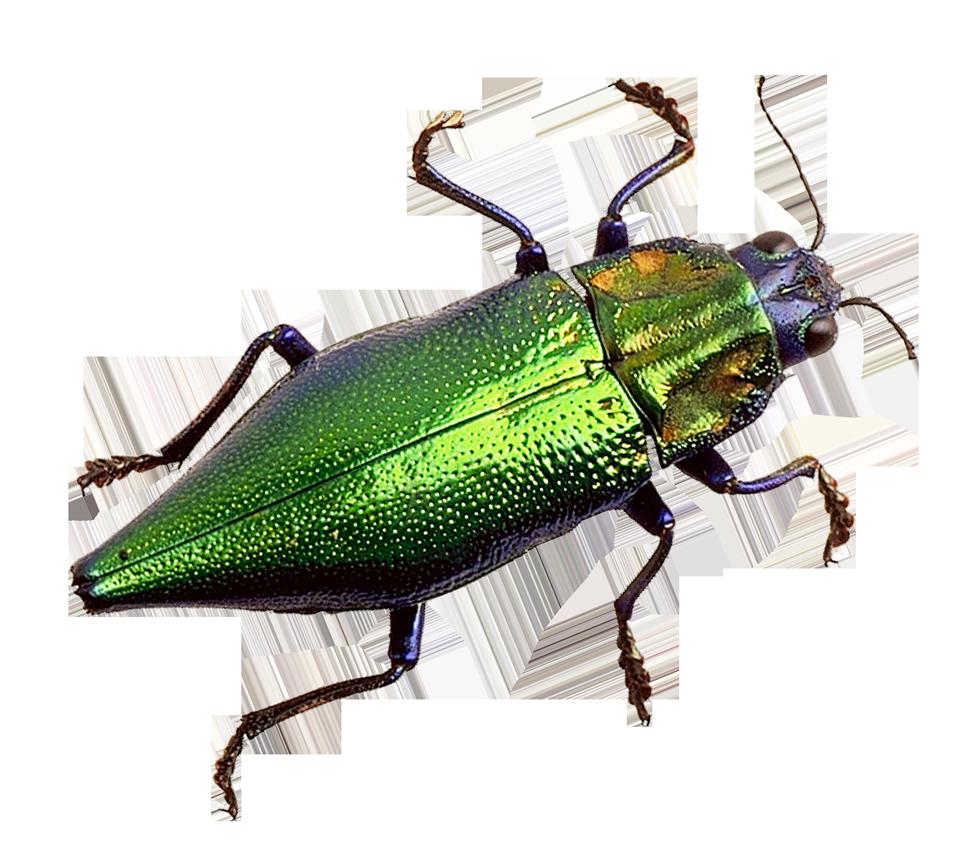 Bug PNG Image