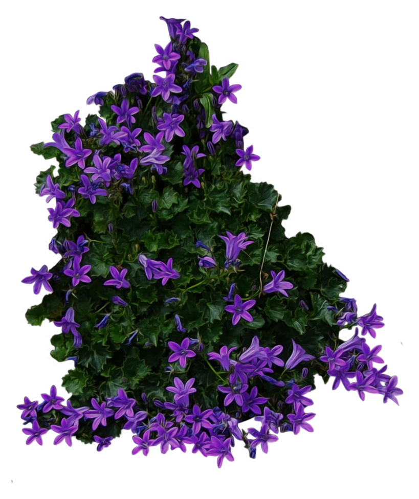 Bush with purple Flowers PNG Image