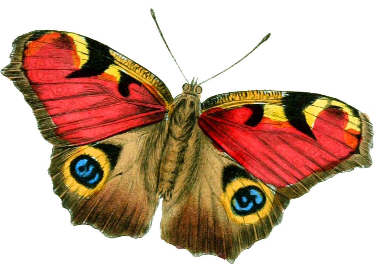 Big Explosion Png Png Image Purepng: Butterfly PNG Image - PurePNG