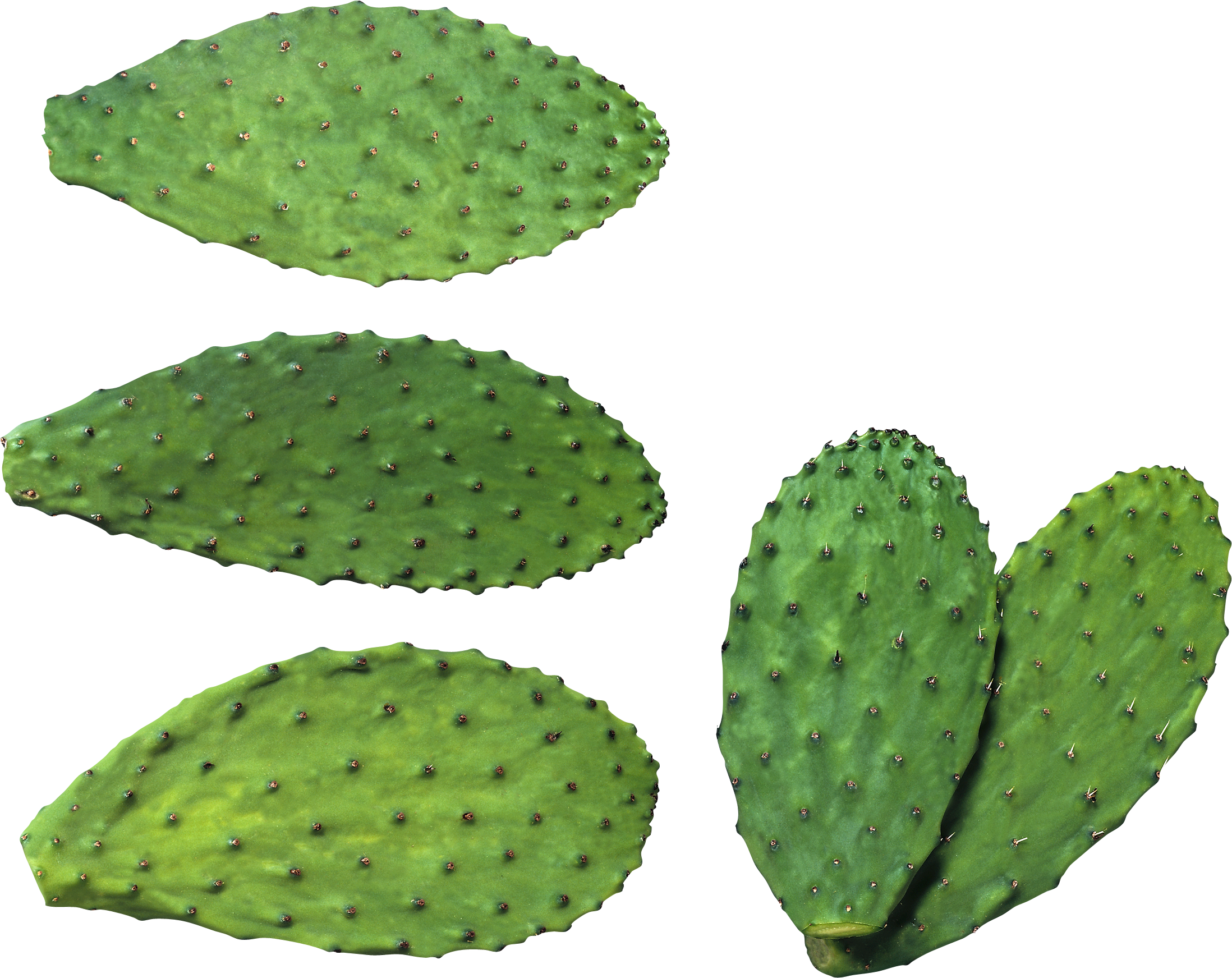 Cactus Plates PNG Image