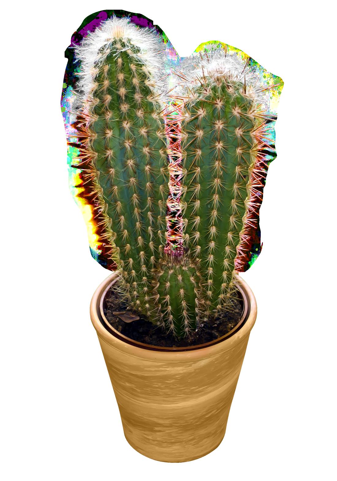 Cactus PNG Image