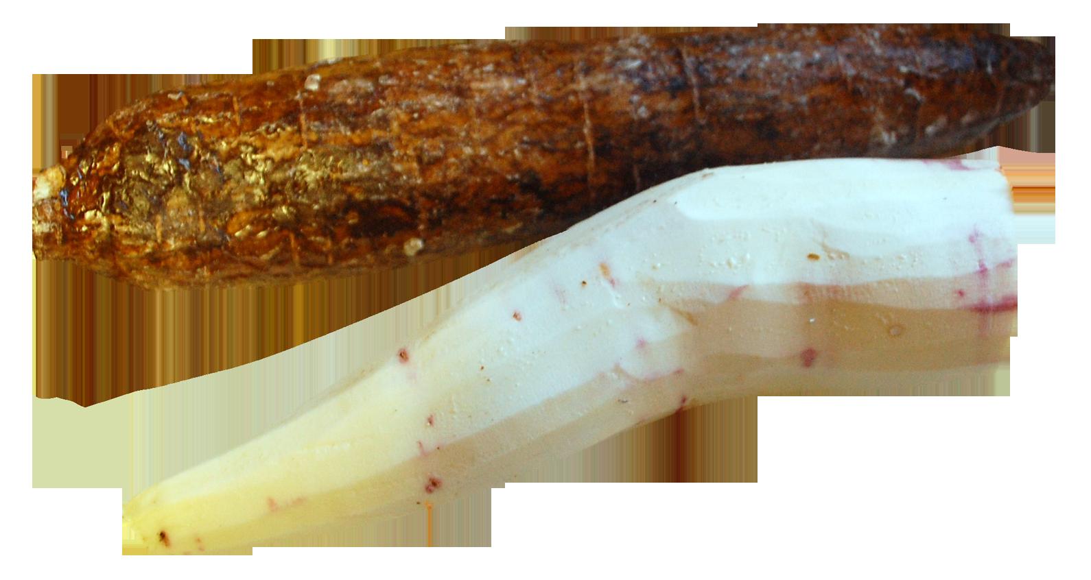 Cassava Peeled PNG Image