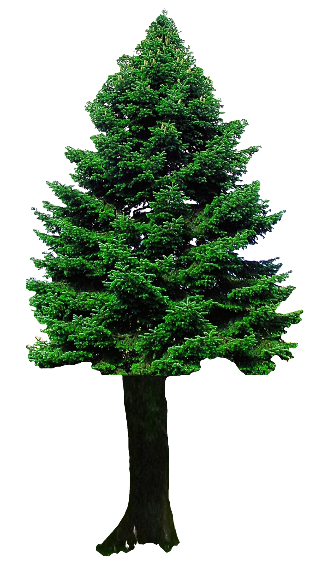 Christmas Tree Png Image Purepng Free Transparent Cc0 Png Image