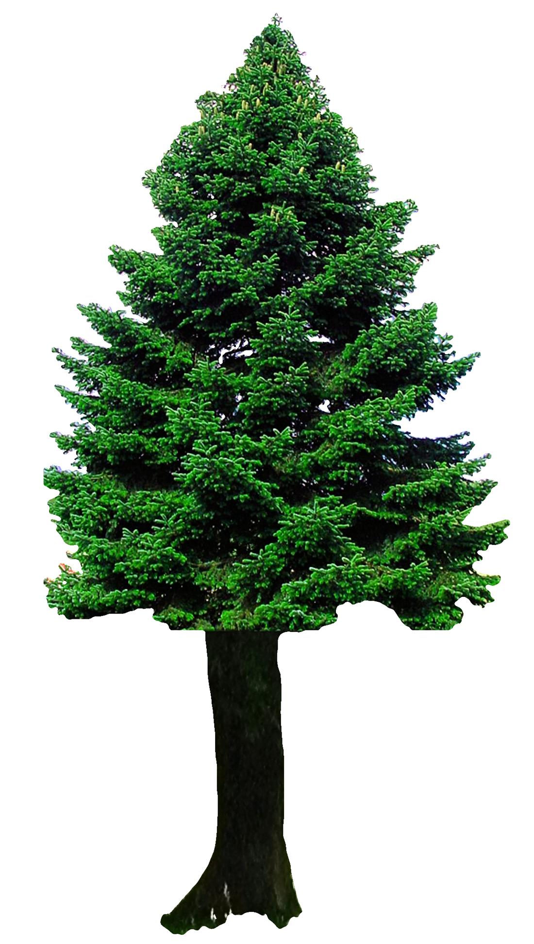Christmas Tree PNG Image