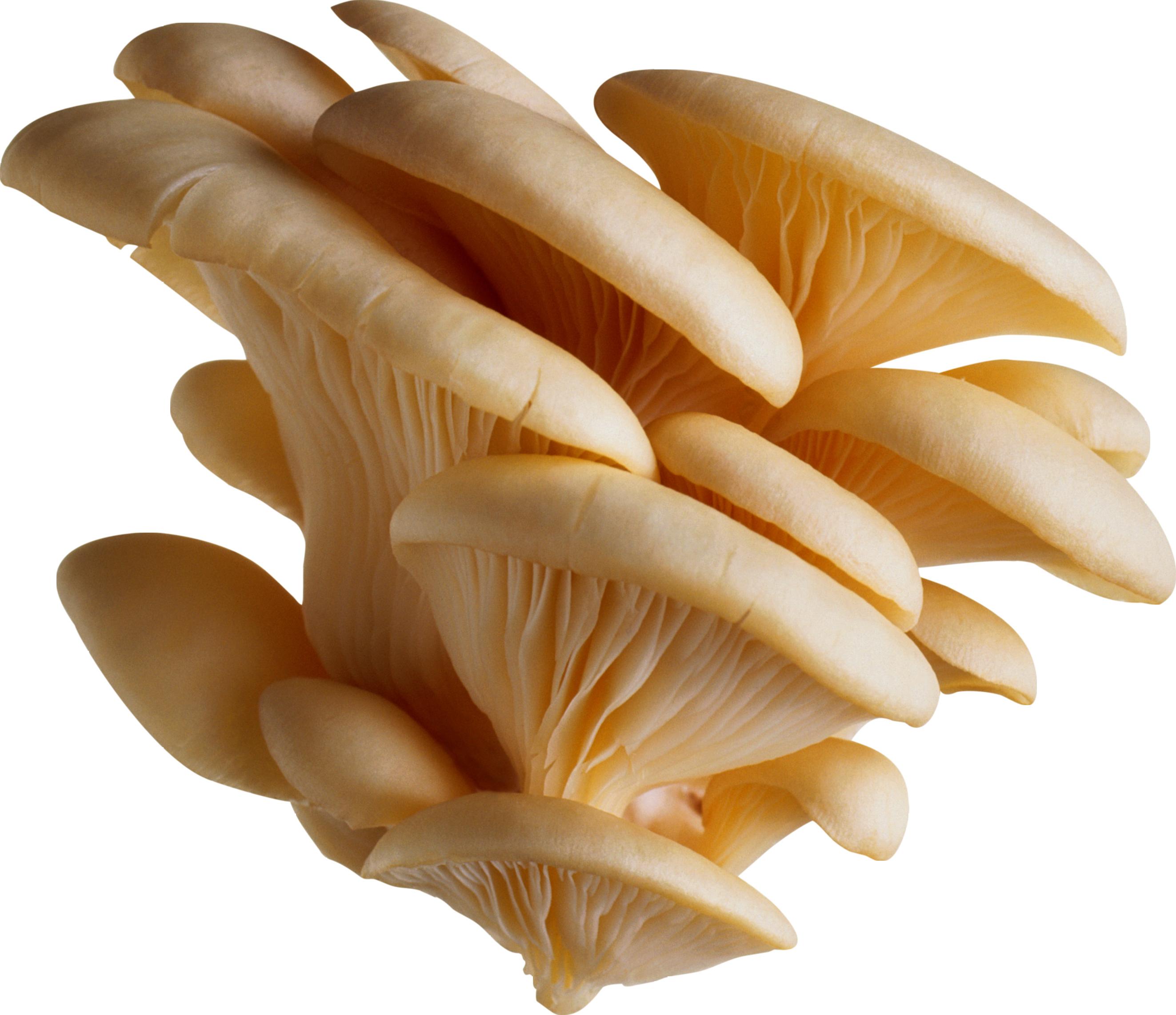 Clean Tree Mushrooms PNG Image