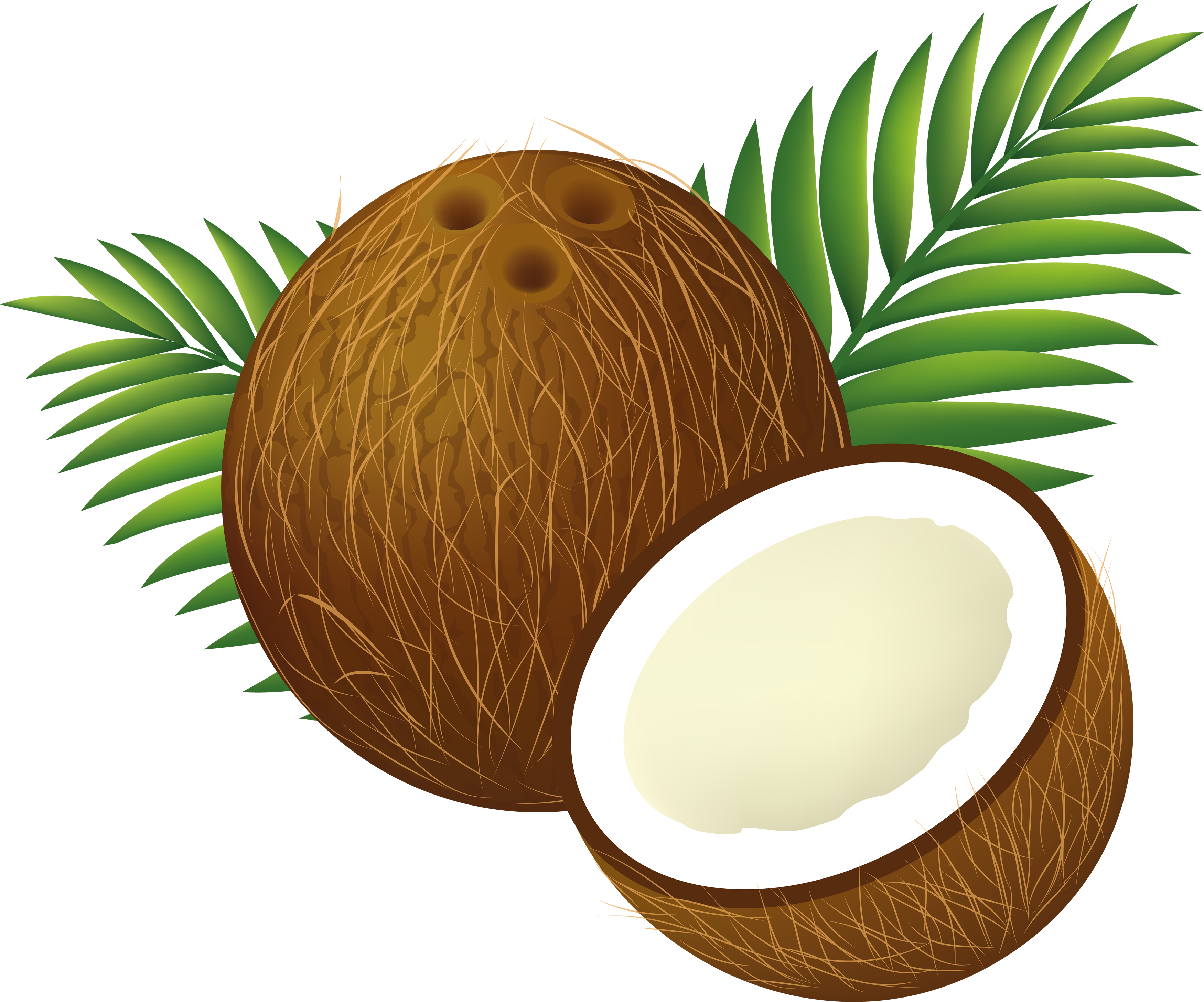 coconut png image purepng free transparent cc0 png image library