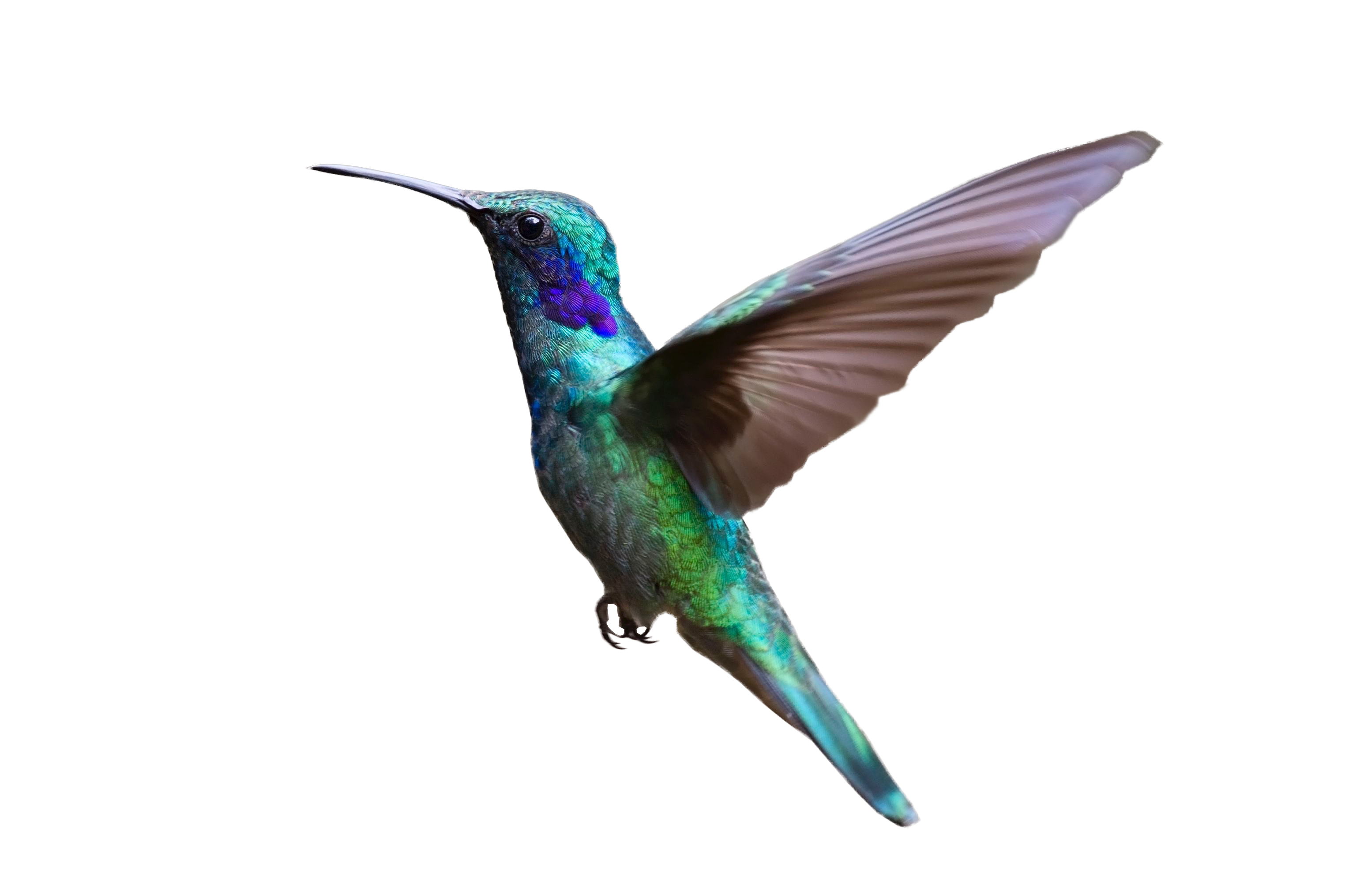 colorful hummingbird flying png image purepng free free chicken clip art to print free chicken clip art pictures