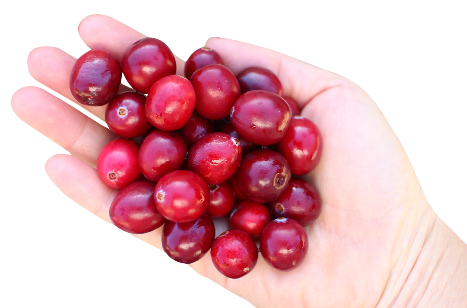 Cranberry in hand