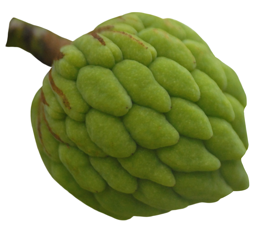 Custard Apple PNG Image