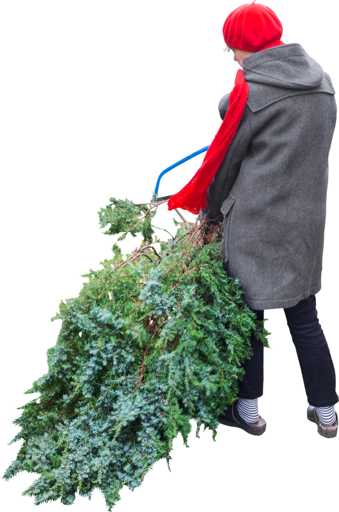 Cuts Tree PNG Image