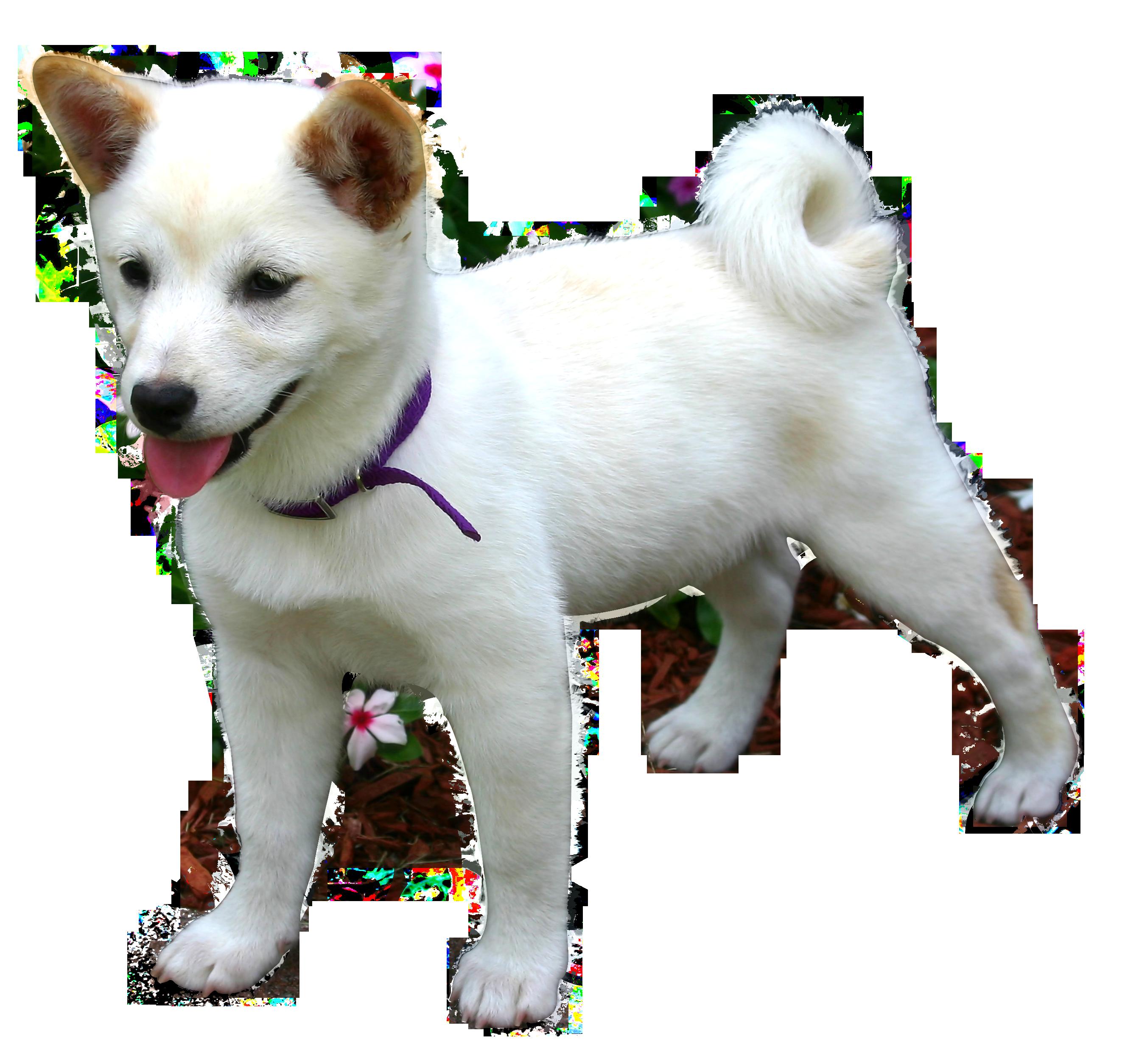 Dog PNG Image - PurePNG | Free transparent CC0 PNG Image ...