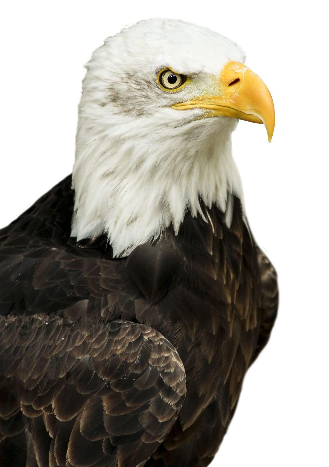 Eagles Members Eagle PNG Image - Pure...