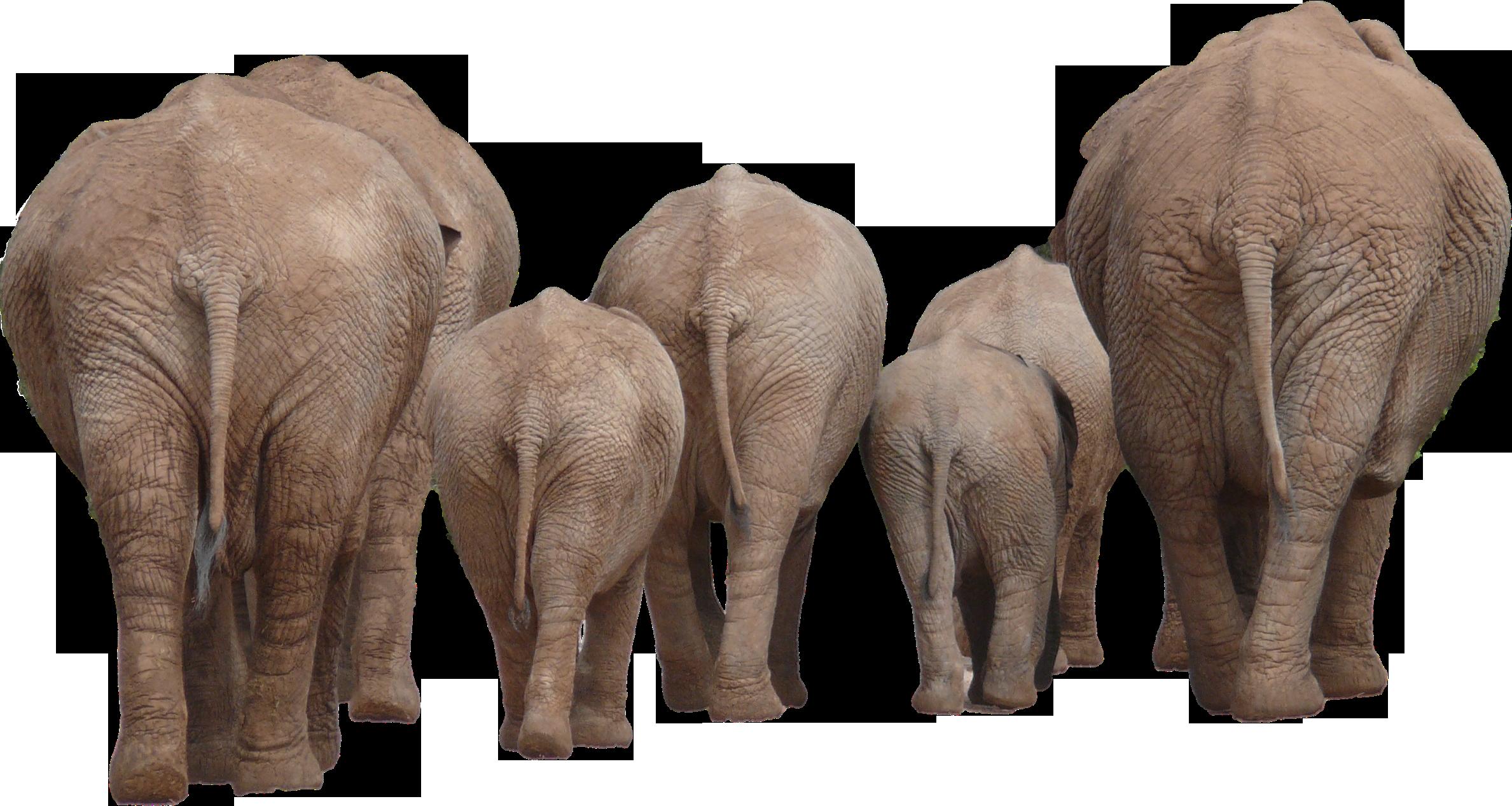 Elephant Group PNG Image