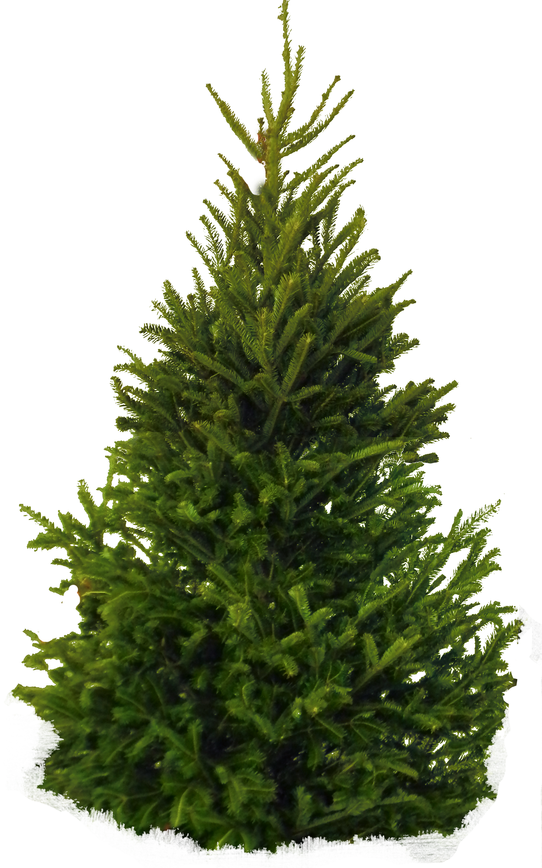 Fir Tree PNG Image - PurePNG | Free transparent CC0 PNG ...