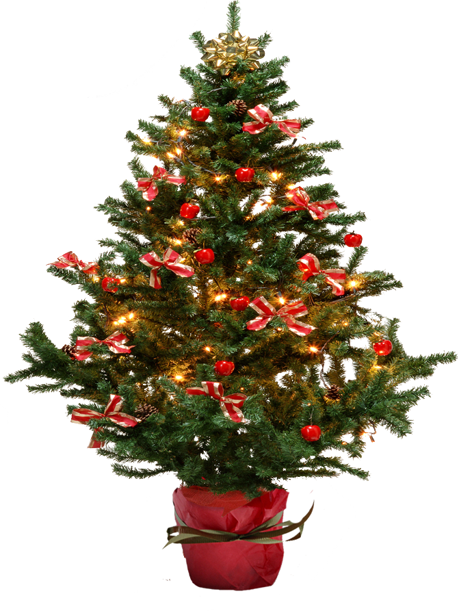 Fir Tree Png Image Purepng Free Transparent Cc0 Png Image Library