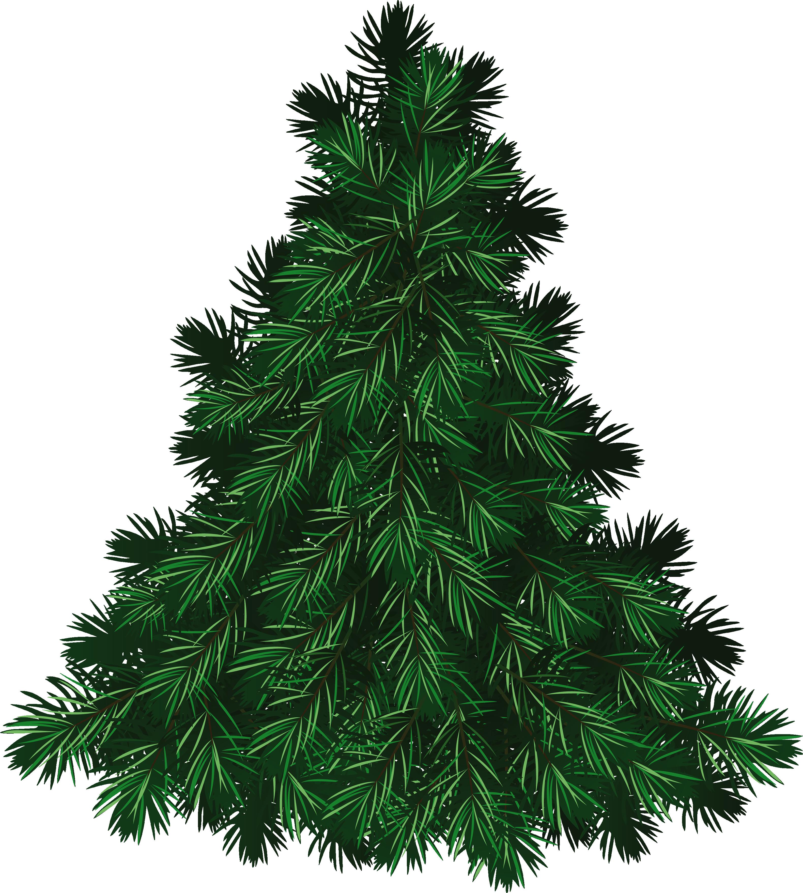 Fir Tree PNG Image