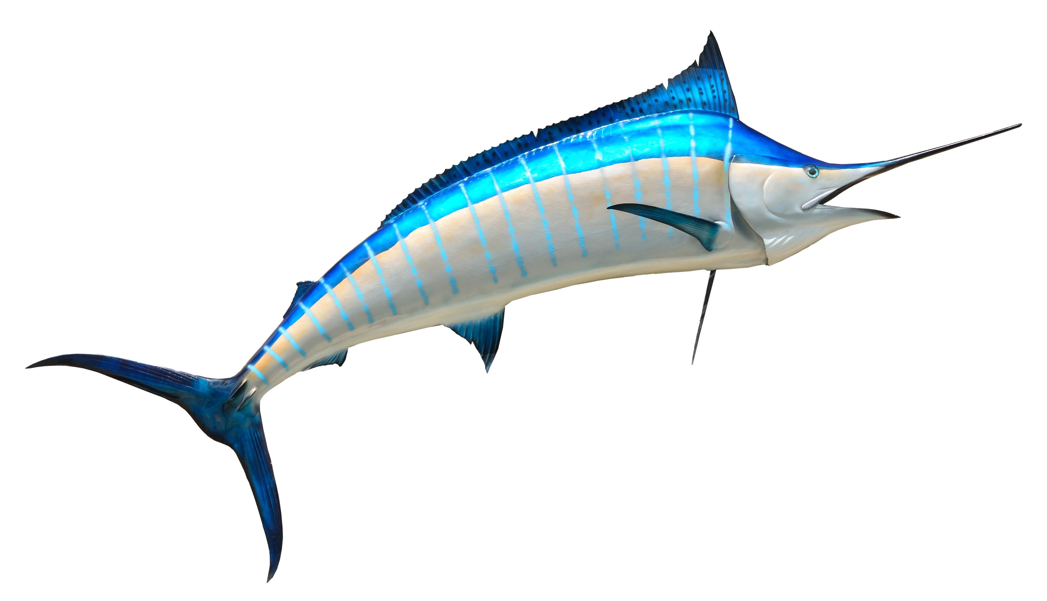 Fish PNG Image