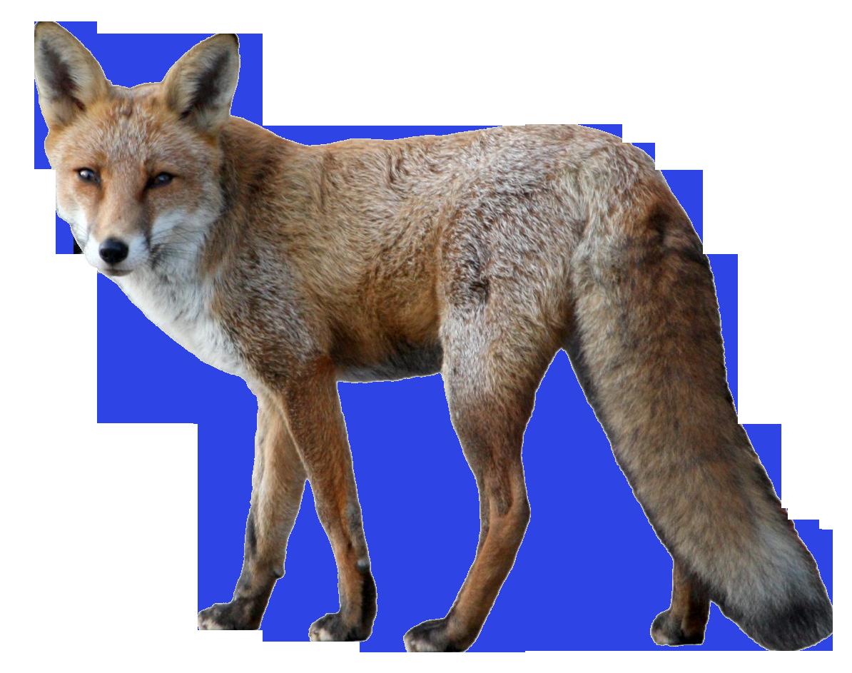 Fox PNG Image