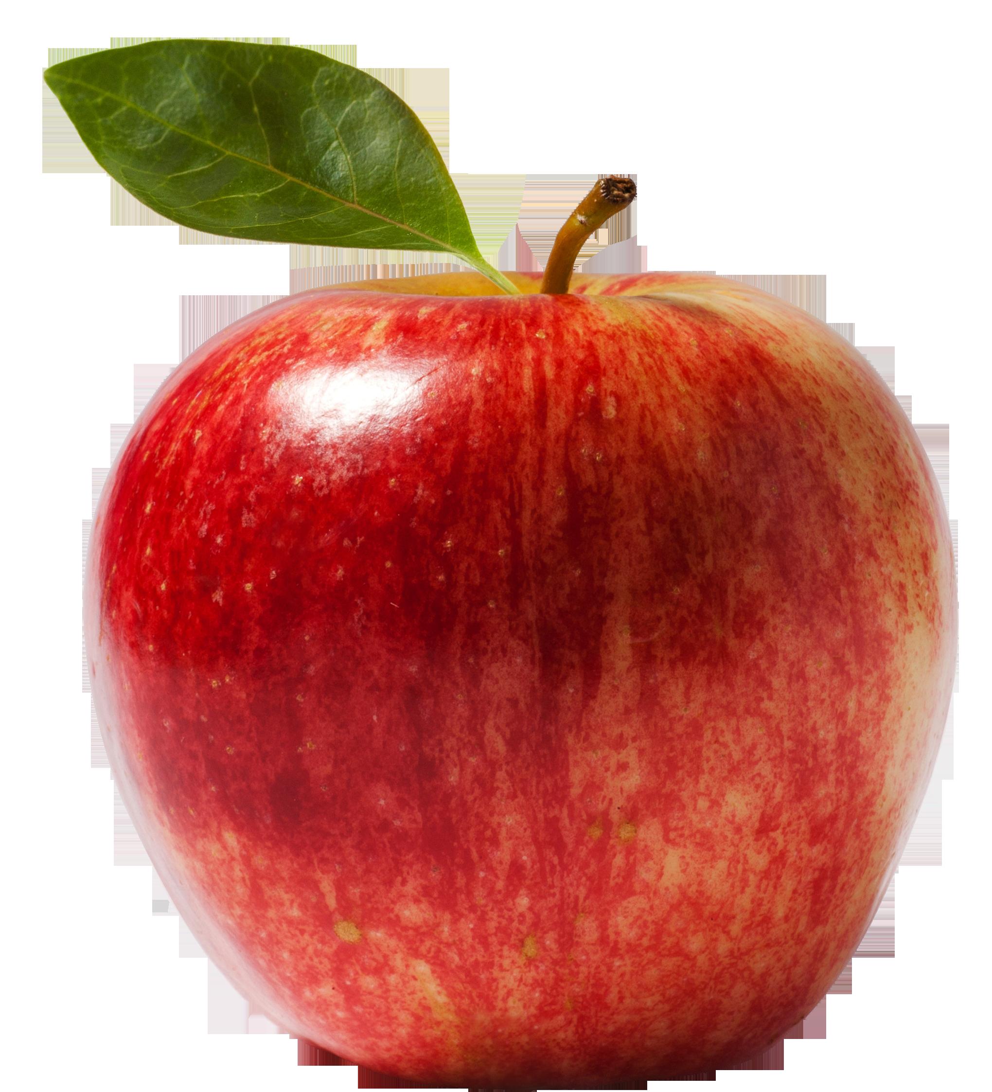 Fresh Apple PNG Image - PurePNG   Free transparent CC0 PNG ...