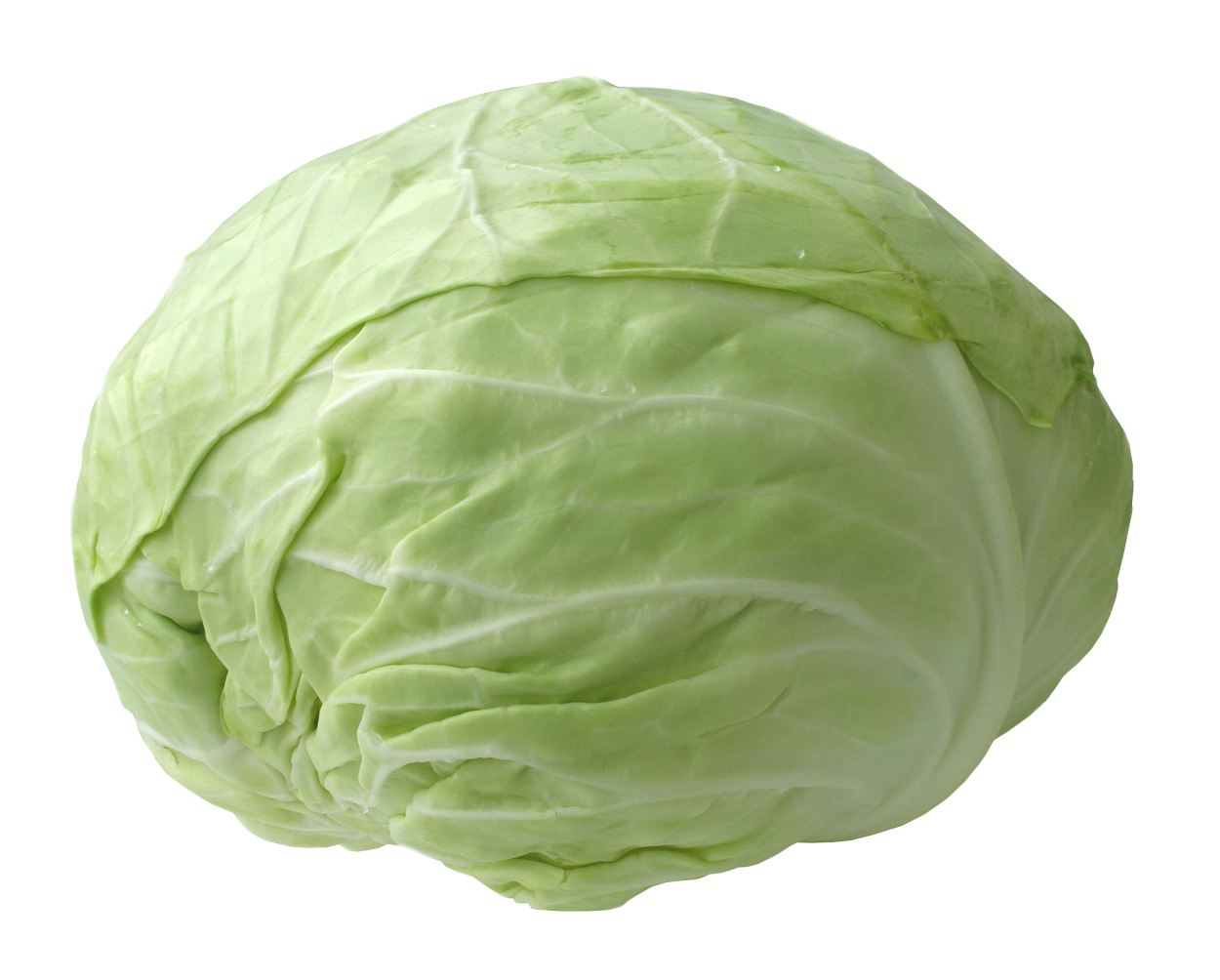 Fresh Cabbage PNG Image
