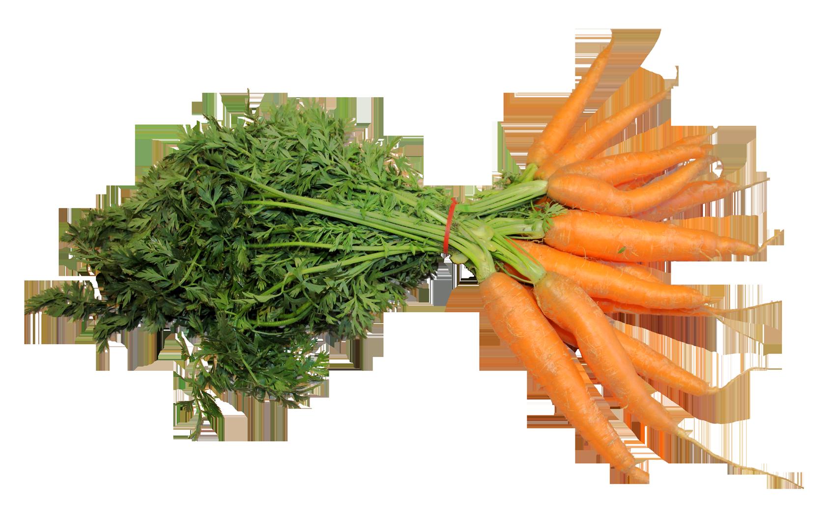 Fresh Carrot PNG Image