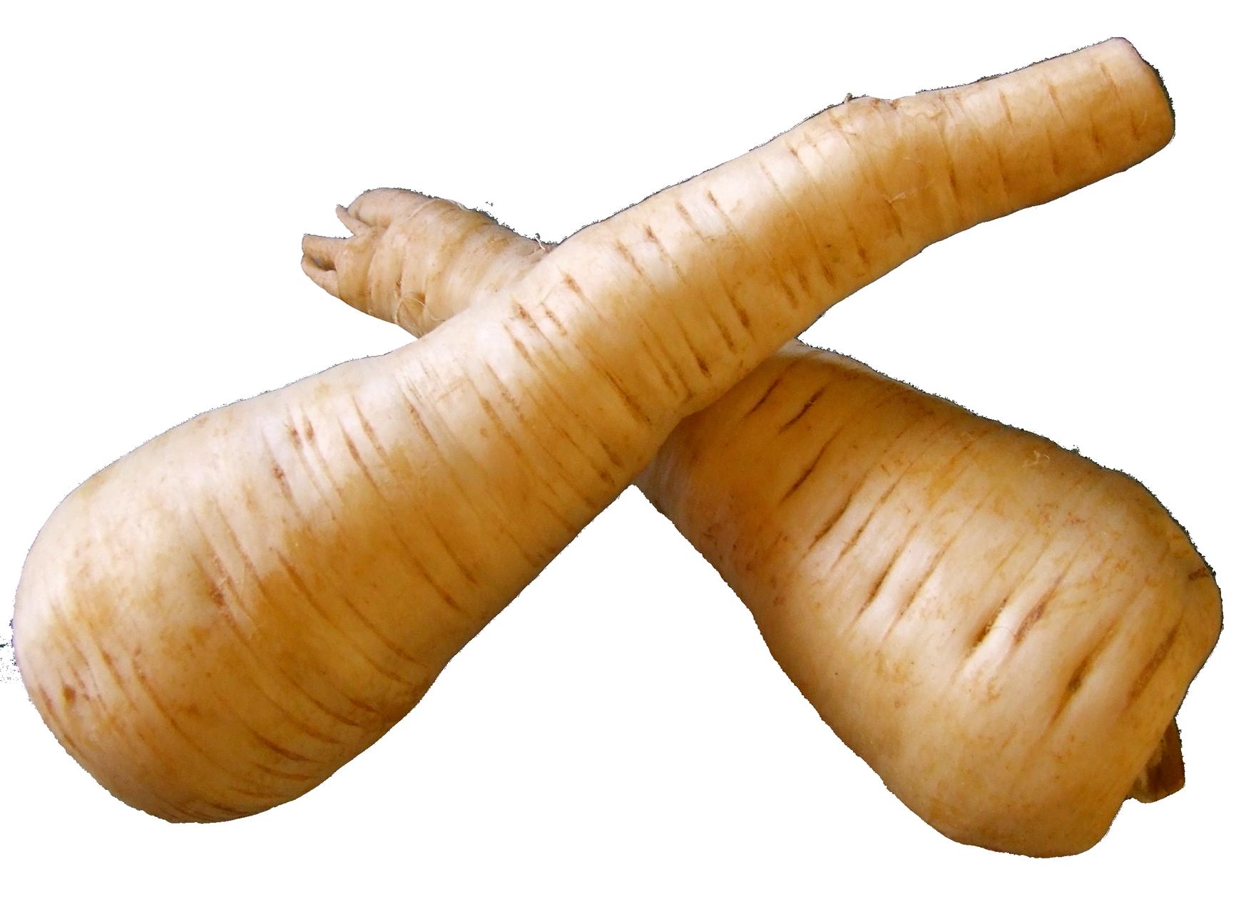 Fresh Parsnip Root