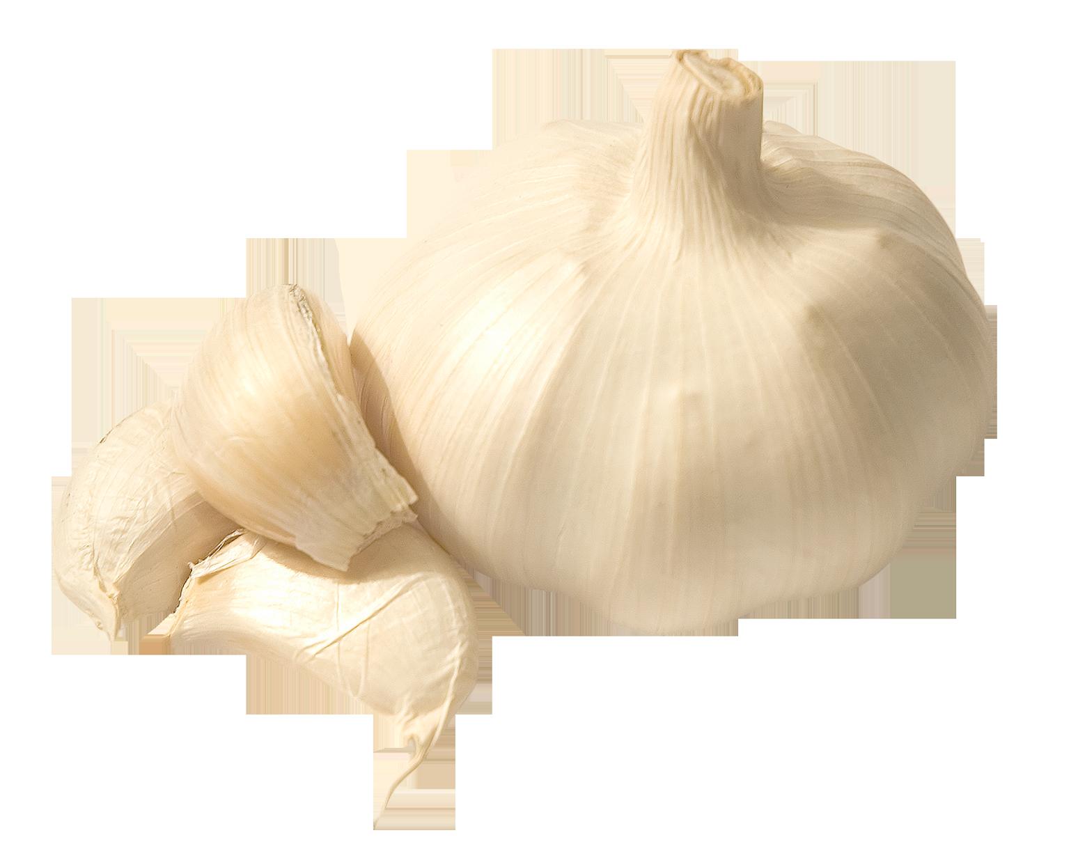 Garlic PNG Image